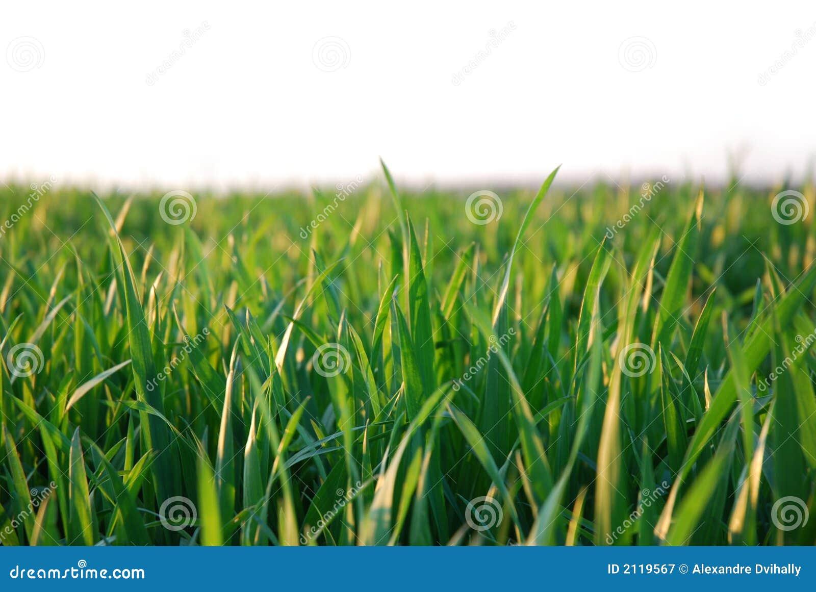 背景草绿色白色
