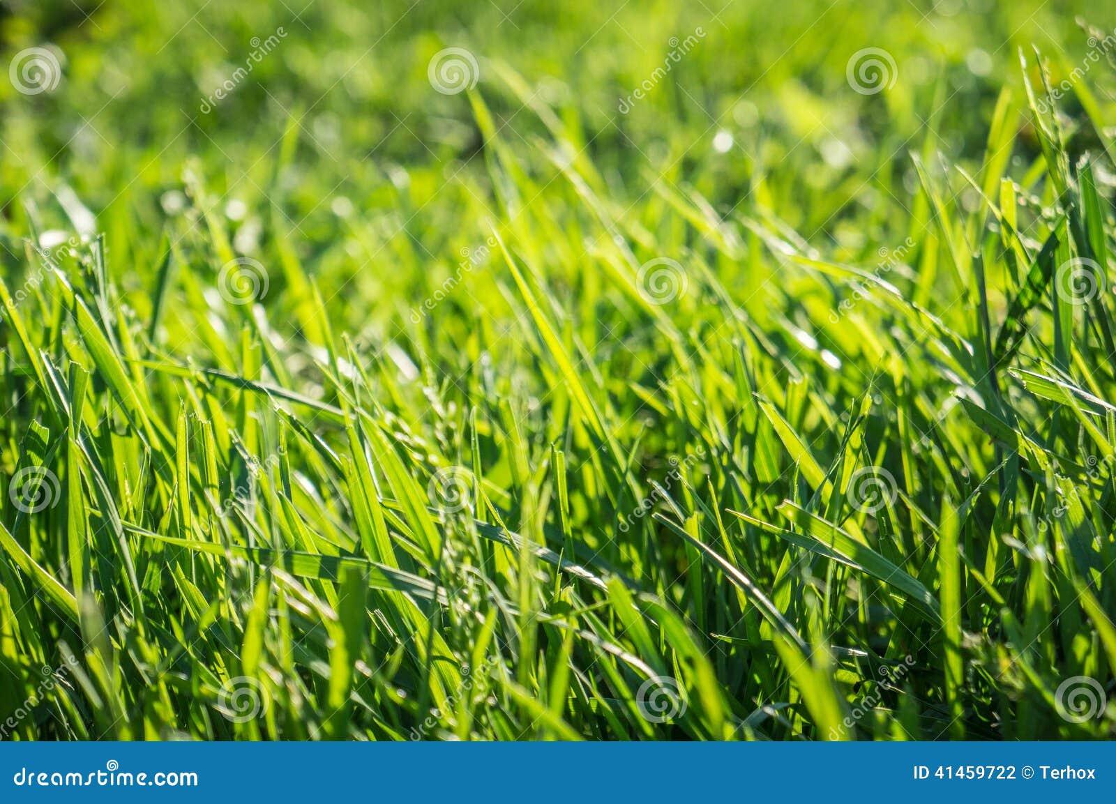 背景草绿色草坪