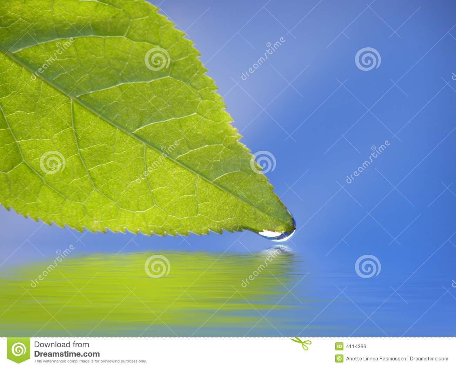 背景蓝绿色叶子