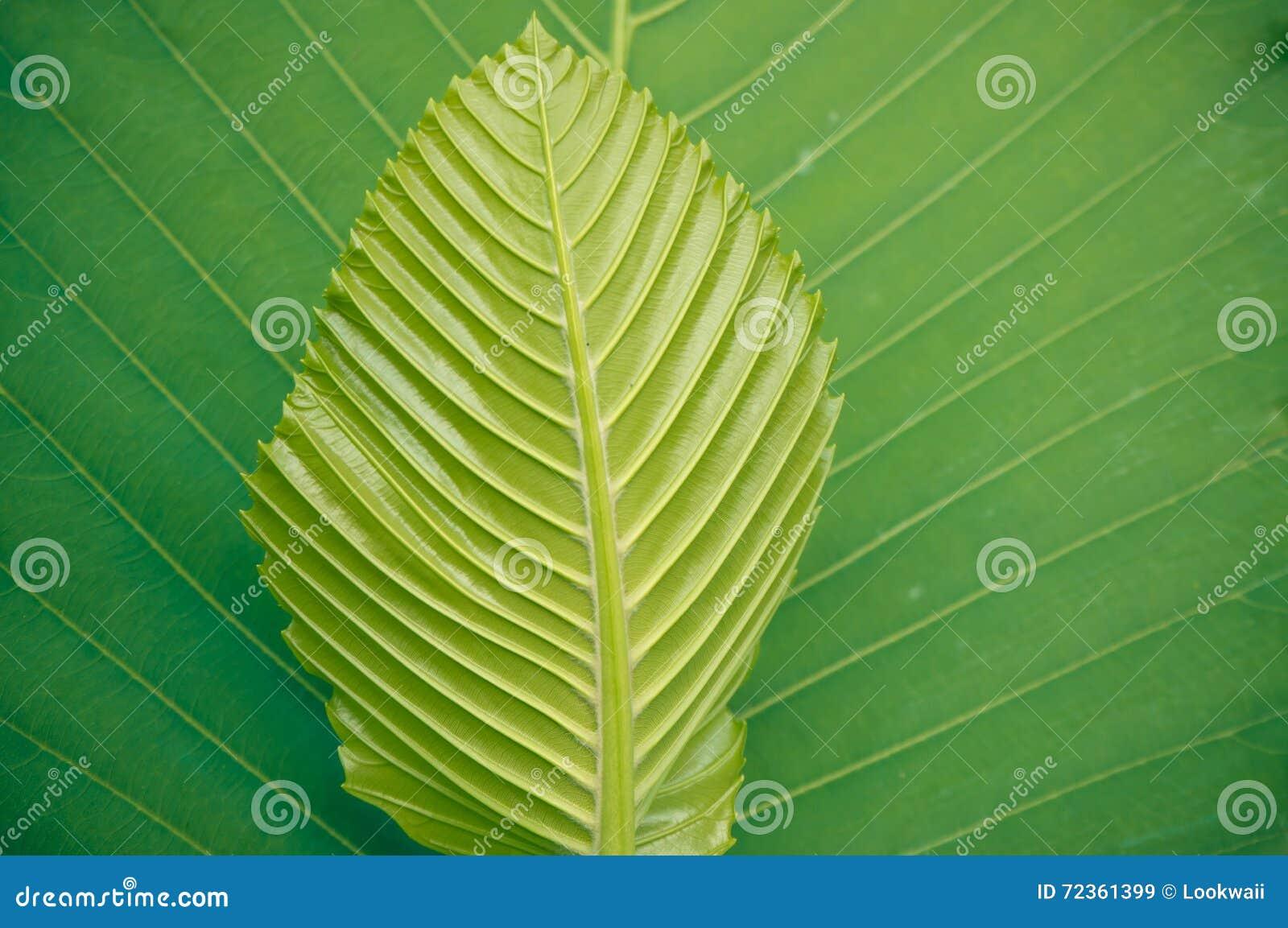 背景绿色叶子纹理