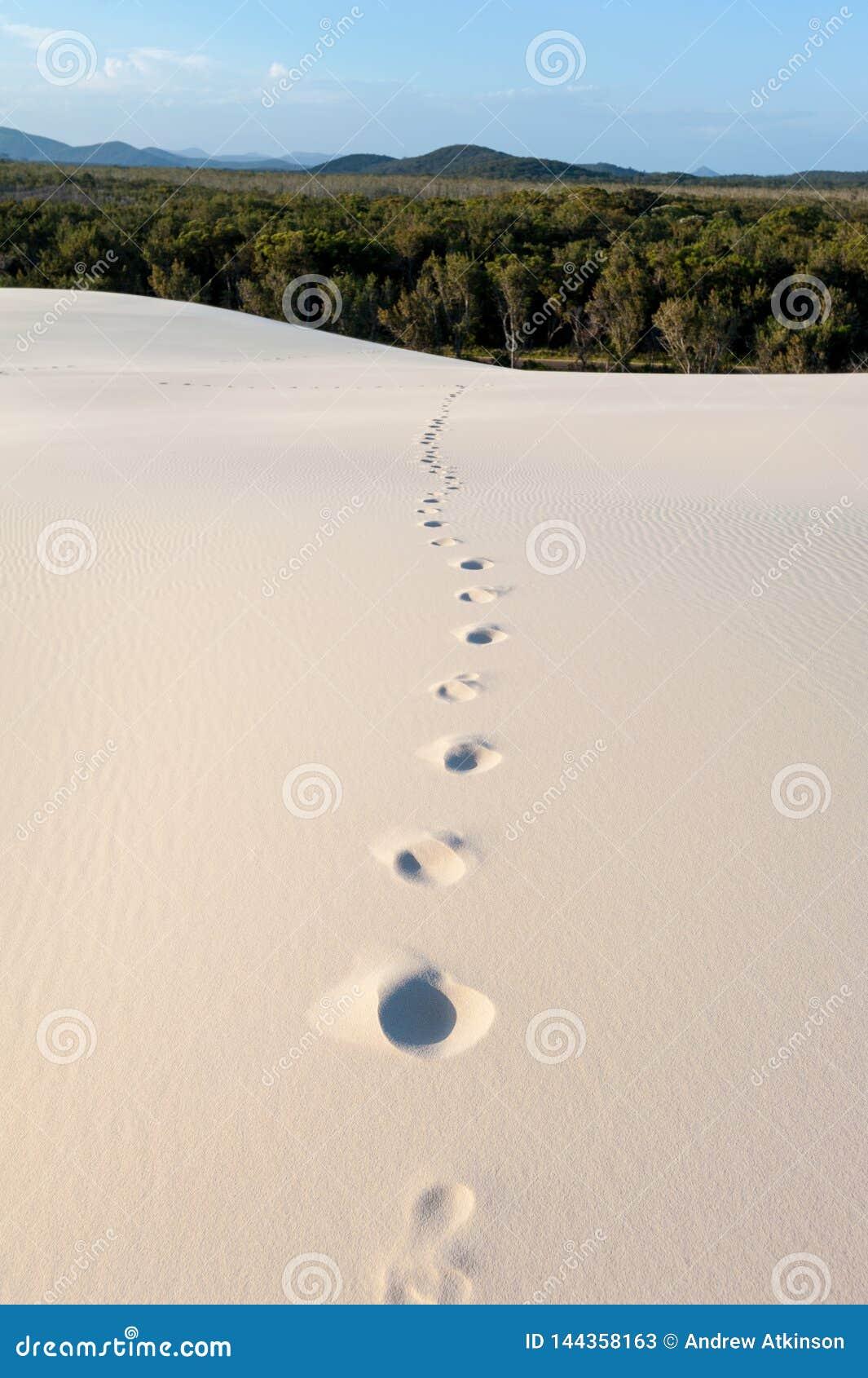 脚印刷品/步导致一个森林和山在沙丘