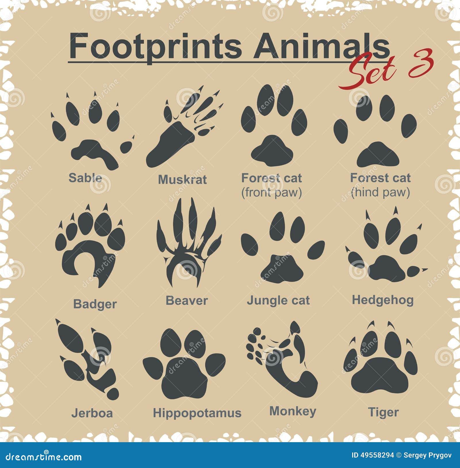 插画 包括有 通配, 陆运, 名字, 狩猎, 符号, 老虎, 研究, 图标图片