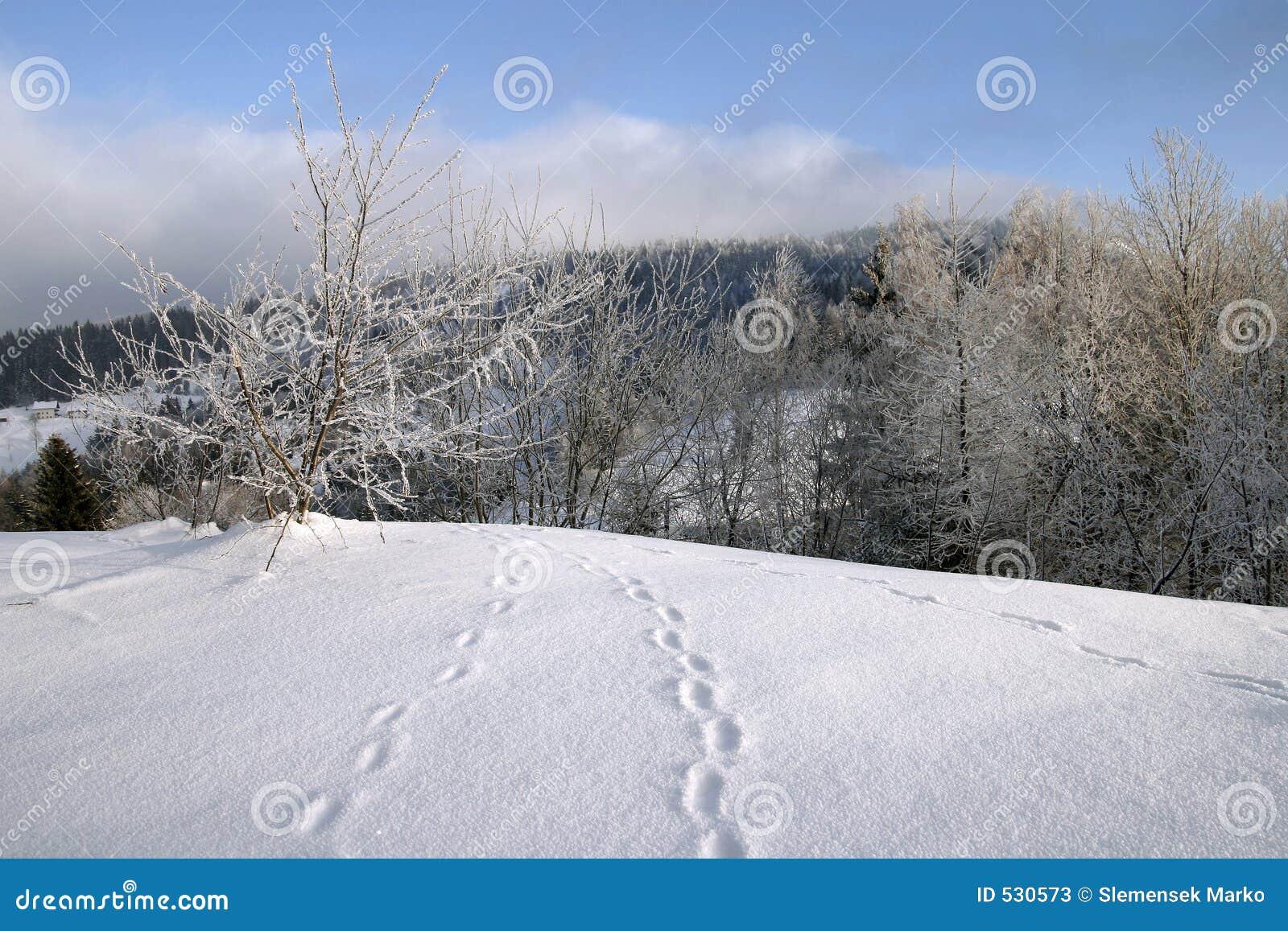 Download 脚步雪 库存图片. 图片 包括有 灌木, 天空, 季节, 国家(地区), 多雪, 空白, 冬天, 工厂, 结构树 - 530573