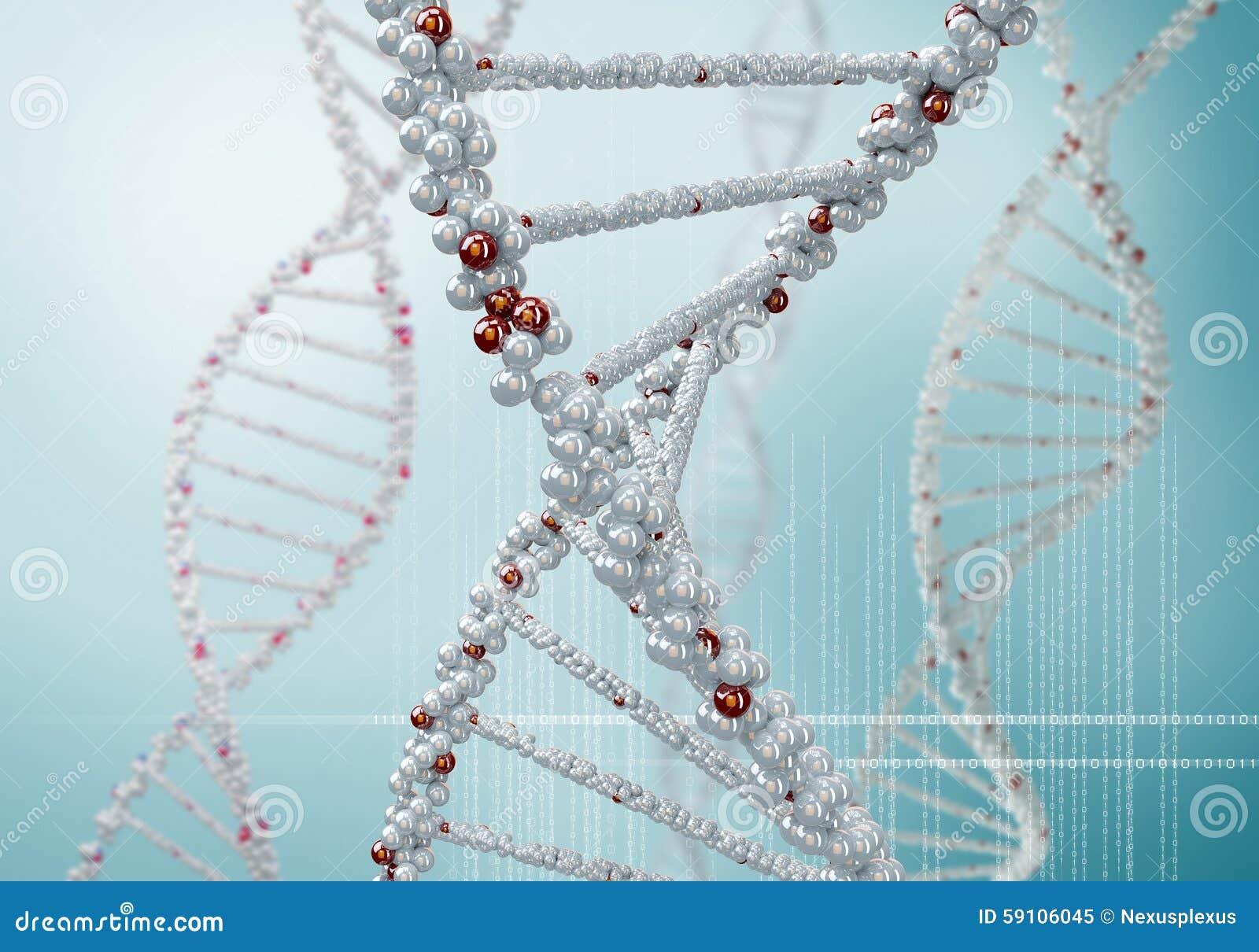 脱氧核糖核酸分子