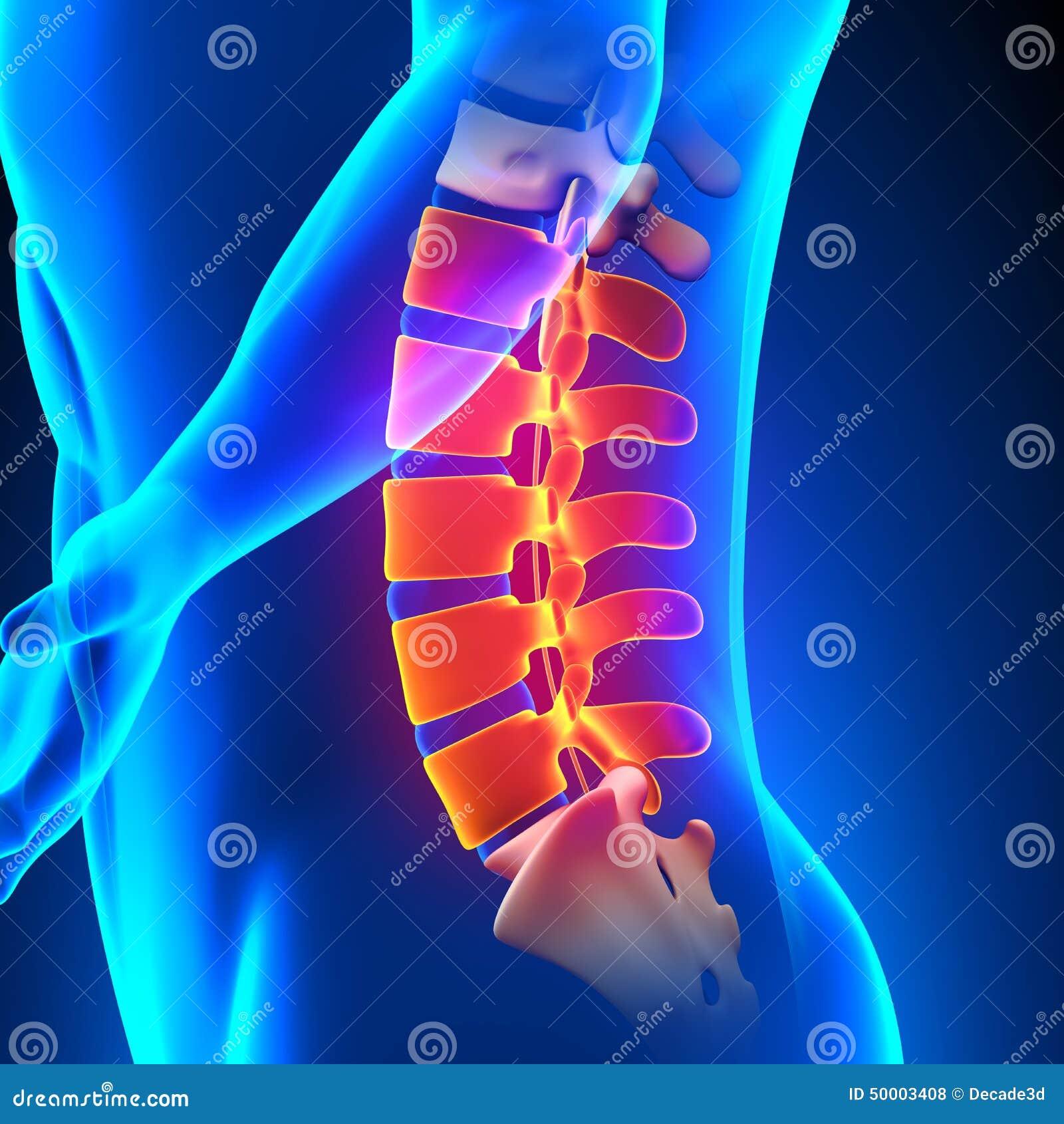 腰脊柱解剖学痛苦概念