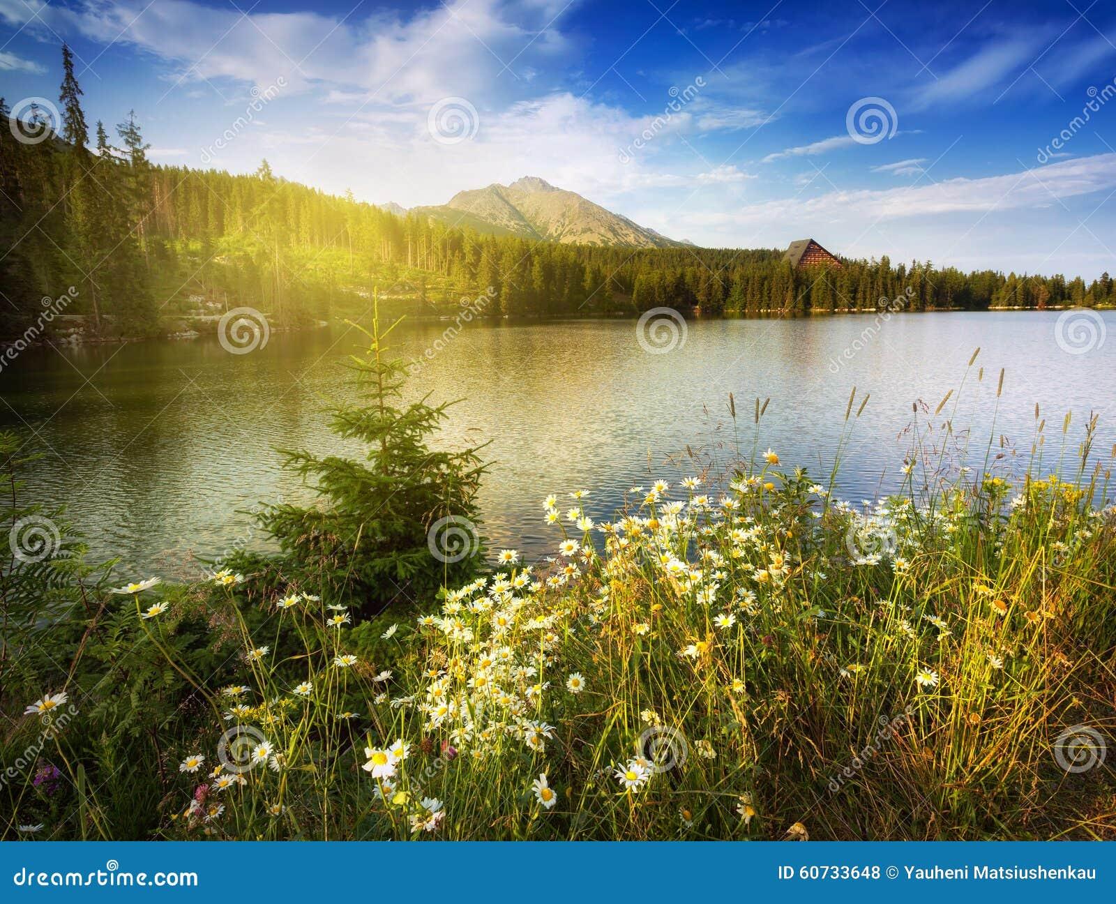 自然与camomiles和湖的山场面