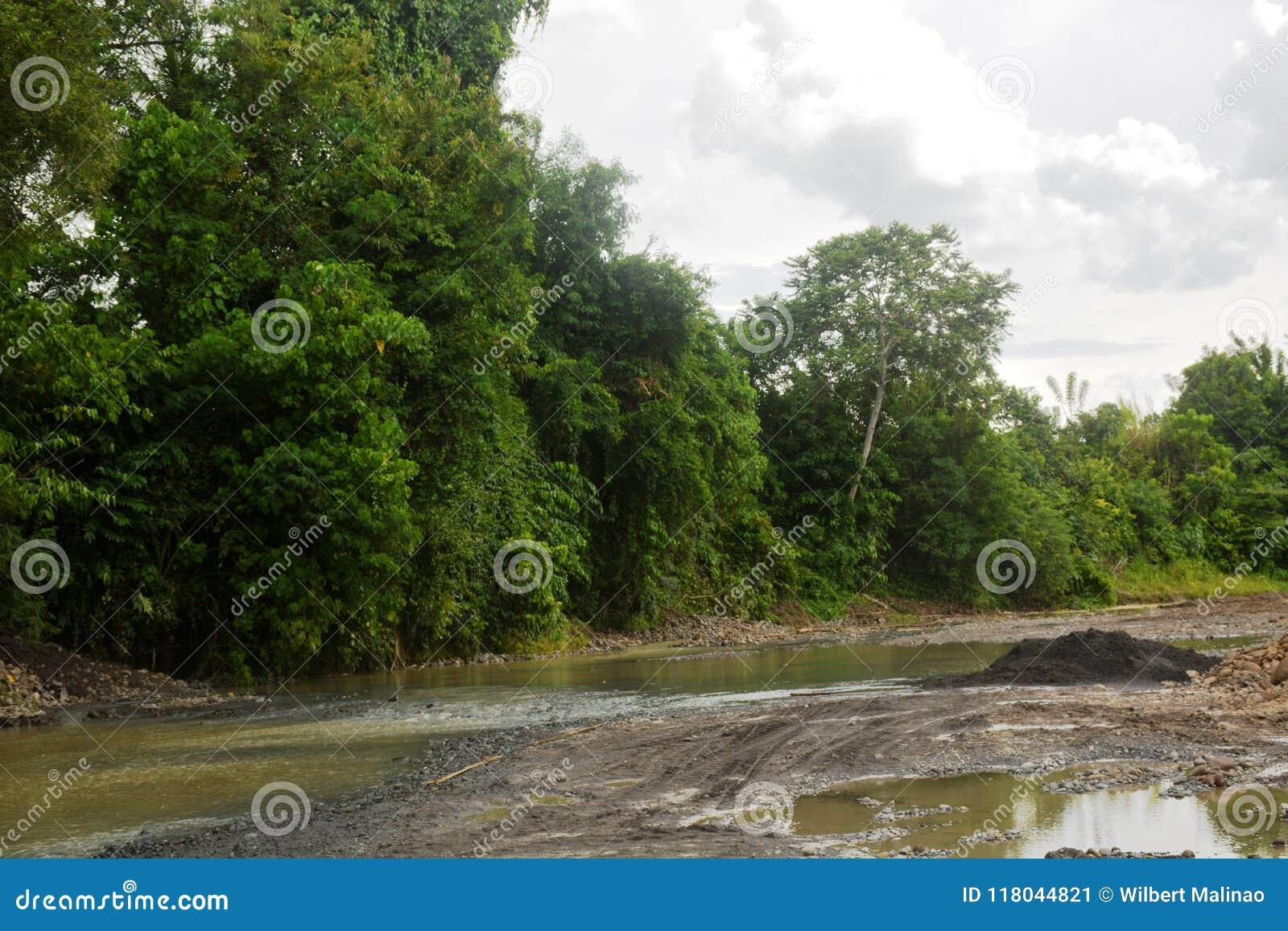 自然增长的植物在Bulatukan河,新的Clarin, Bansalan,南达沃省,菲律宾