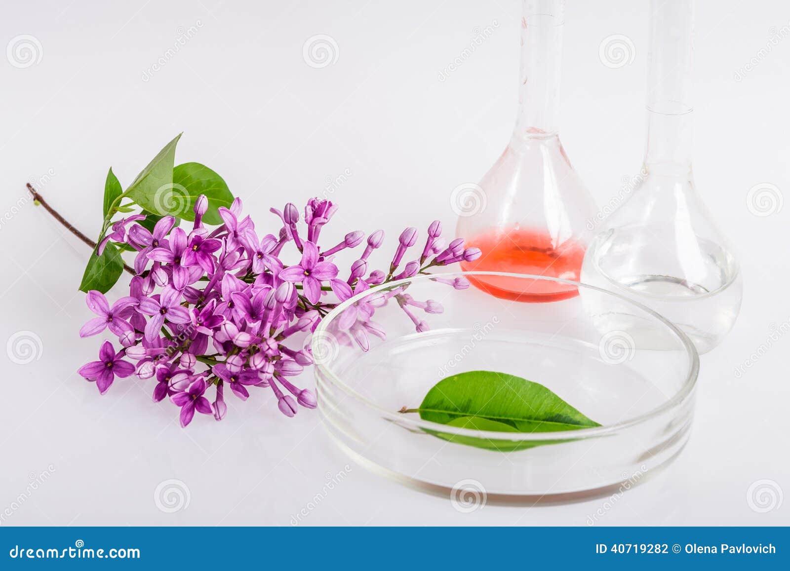 自然成份的提取的实验室盘在香料厂的