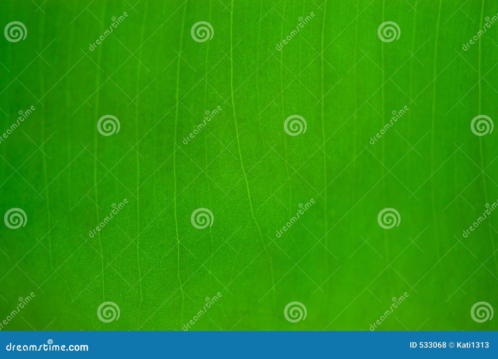 Download 自然的背景 库存照片. 图片 包括有 自然, 结构, 纹理, 模式, 绿色, 背包, 有机, 关闭, 特写镜头 - 533068