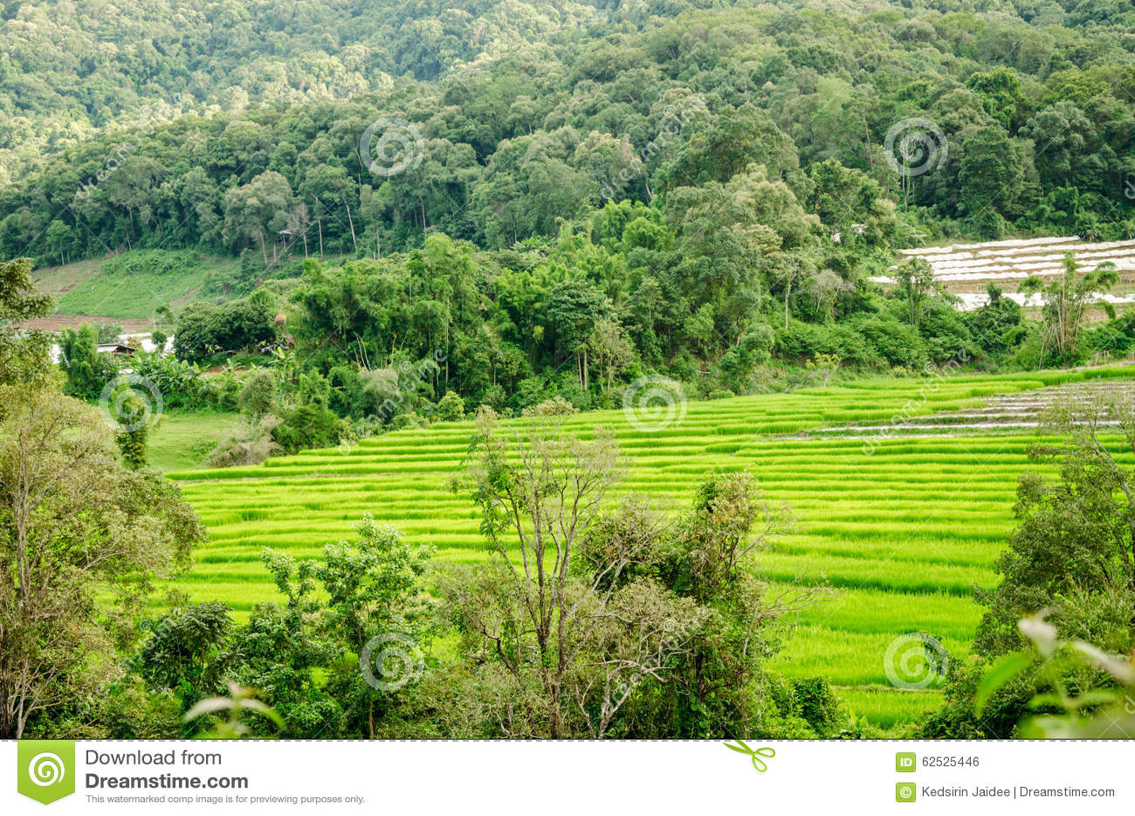 自然看法在国家村庄,泰国