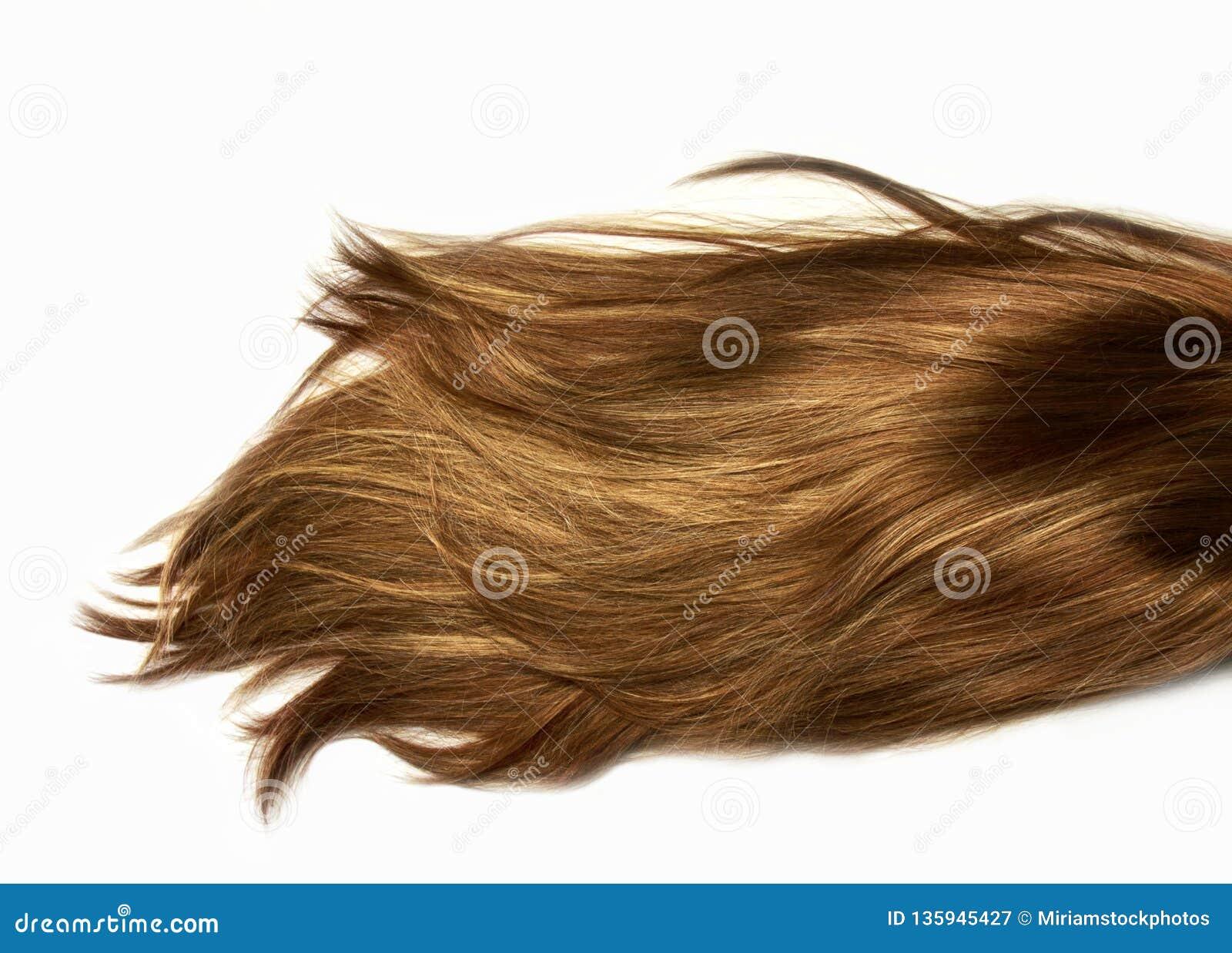 自然聚焦发光的健康人的长发 引伸和假发