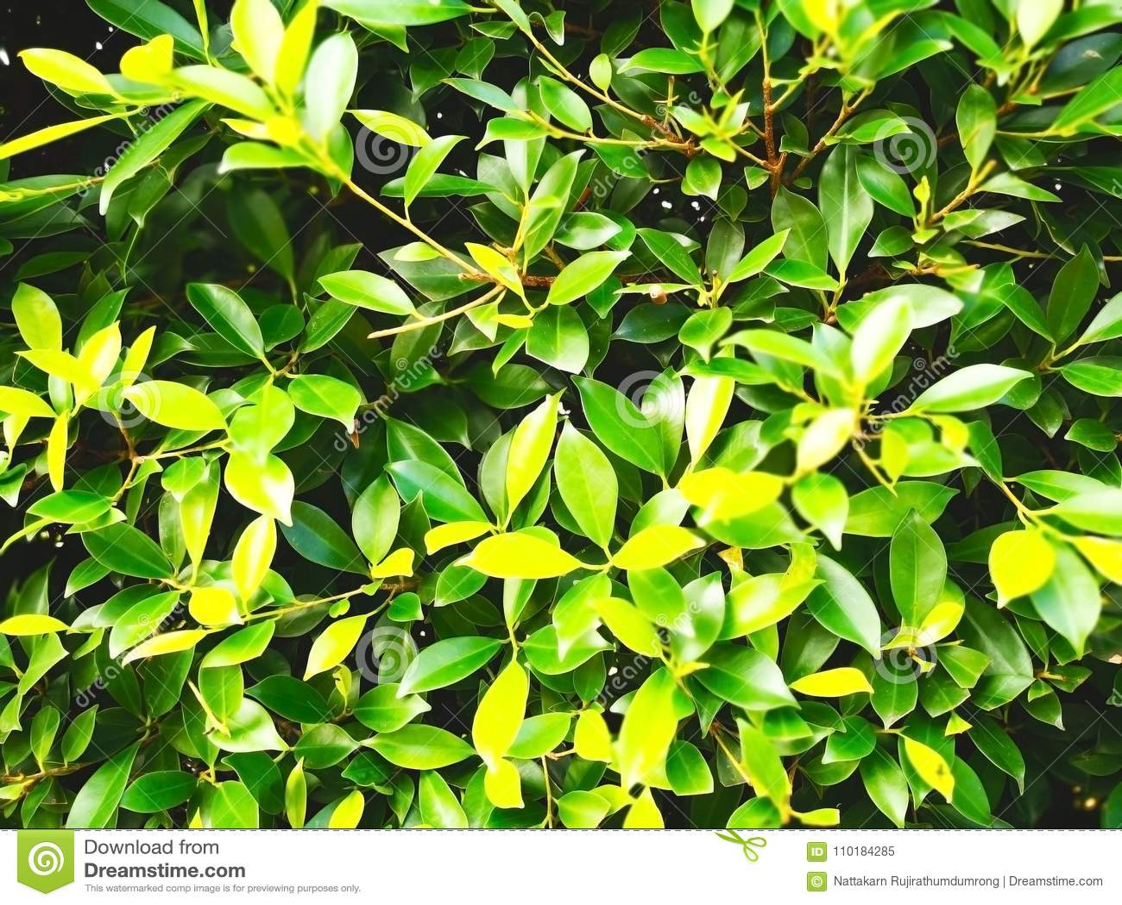 自然背景的概念 绿色灌木树在publi