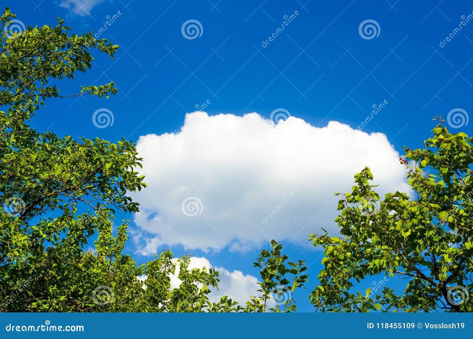 自然风景,包括在树背景的一朵云彩加冠