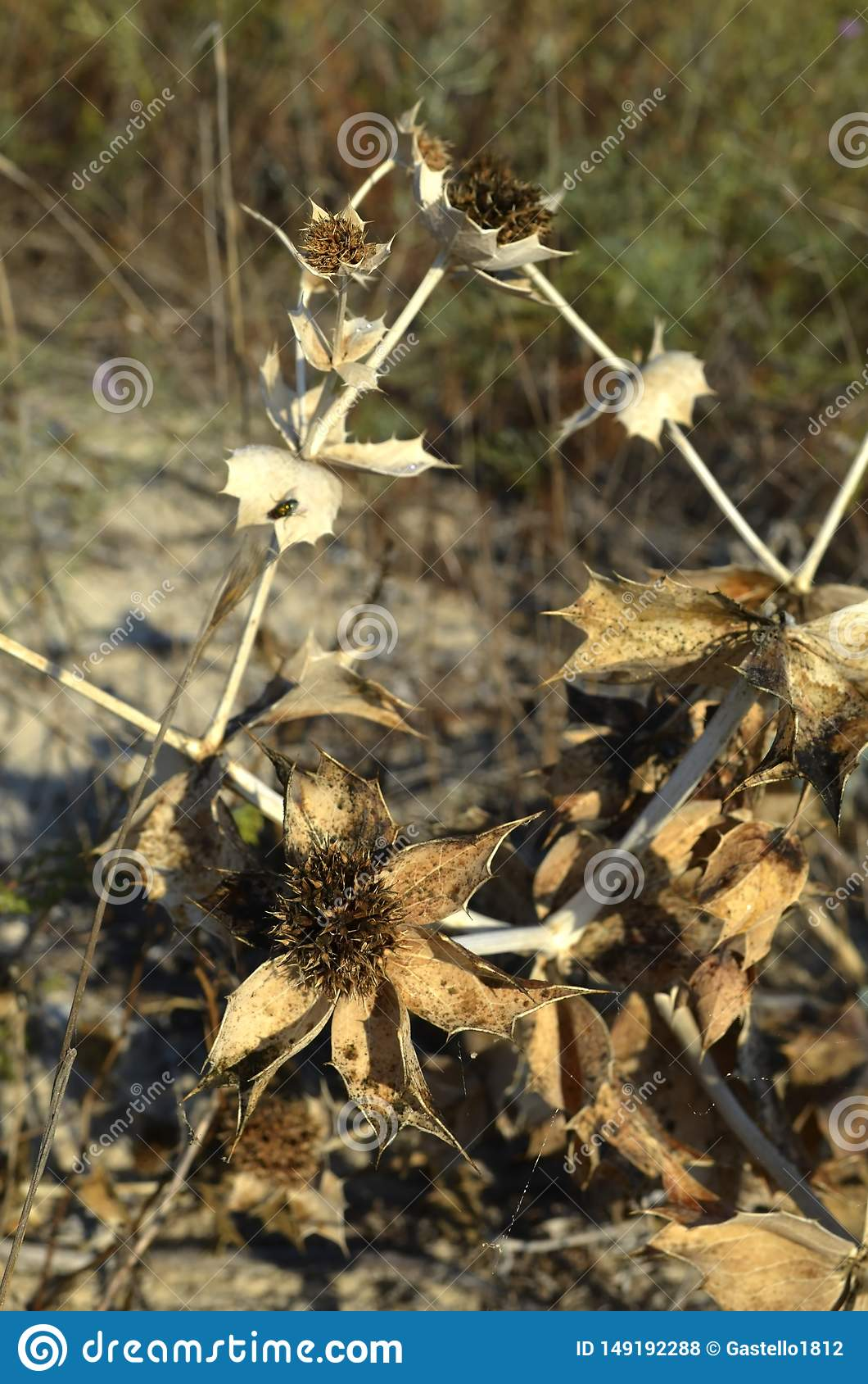 自然,植物,树,叶子,宏指令,森林,棕色,干燥,花,叶子,绿色,特写镜头,草,秋天,纹理,蜘蛛,木头,杉木,