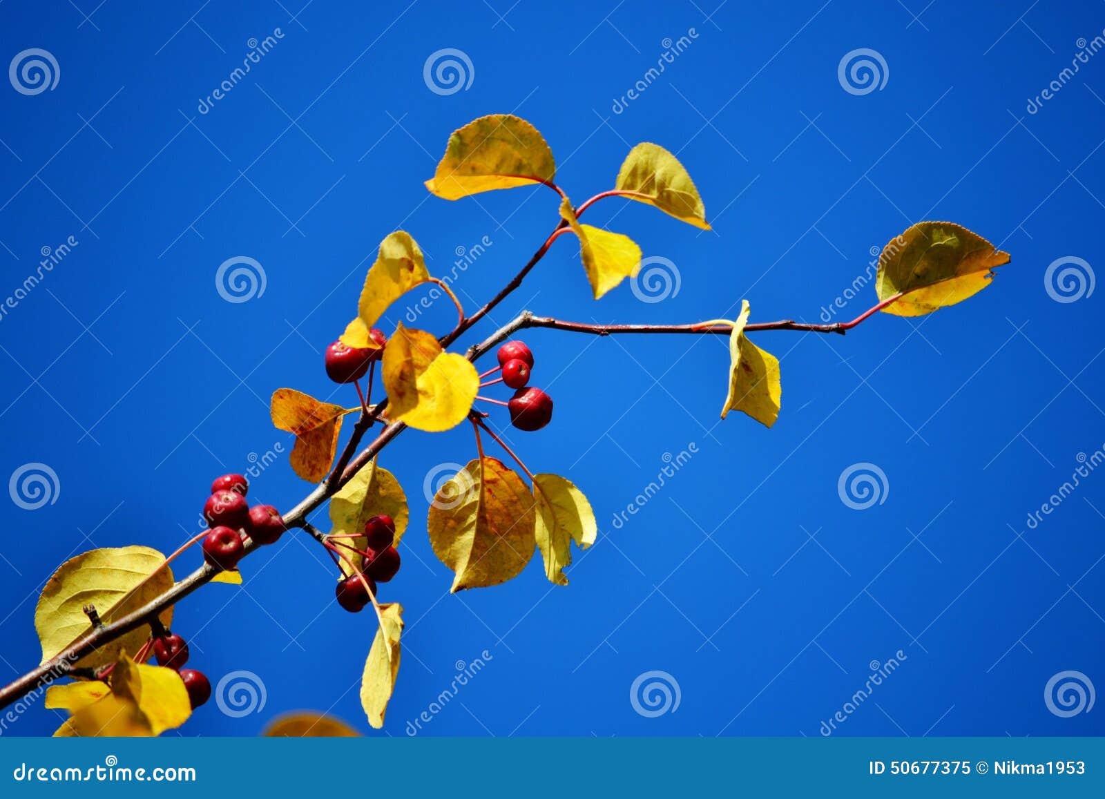 Download 自然Altaya 库存图片. 图片 包括有 春天, 水坑, 所有, 自动, 蓝色, 冰柱, 叶子, 绿色 - 50677375