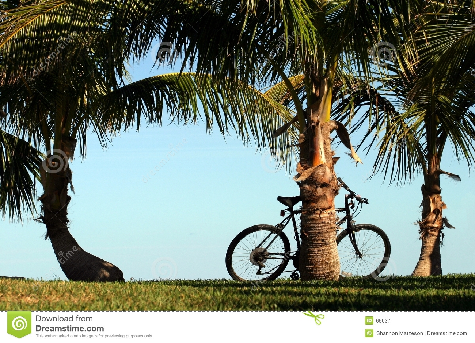 自行车可可椰子