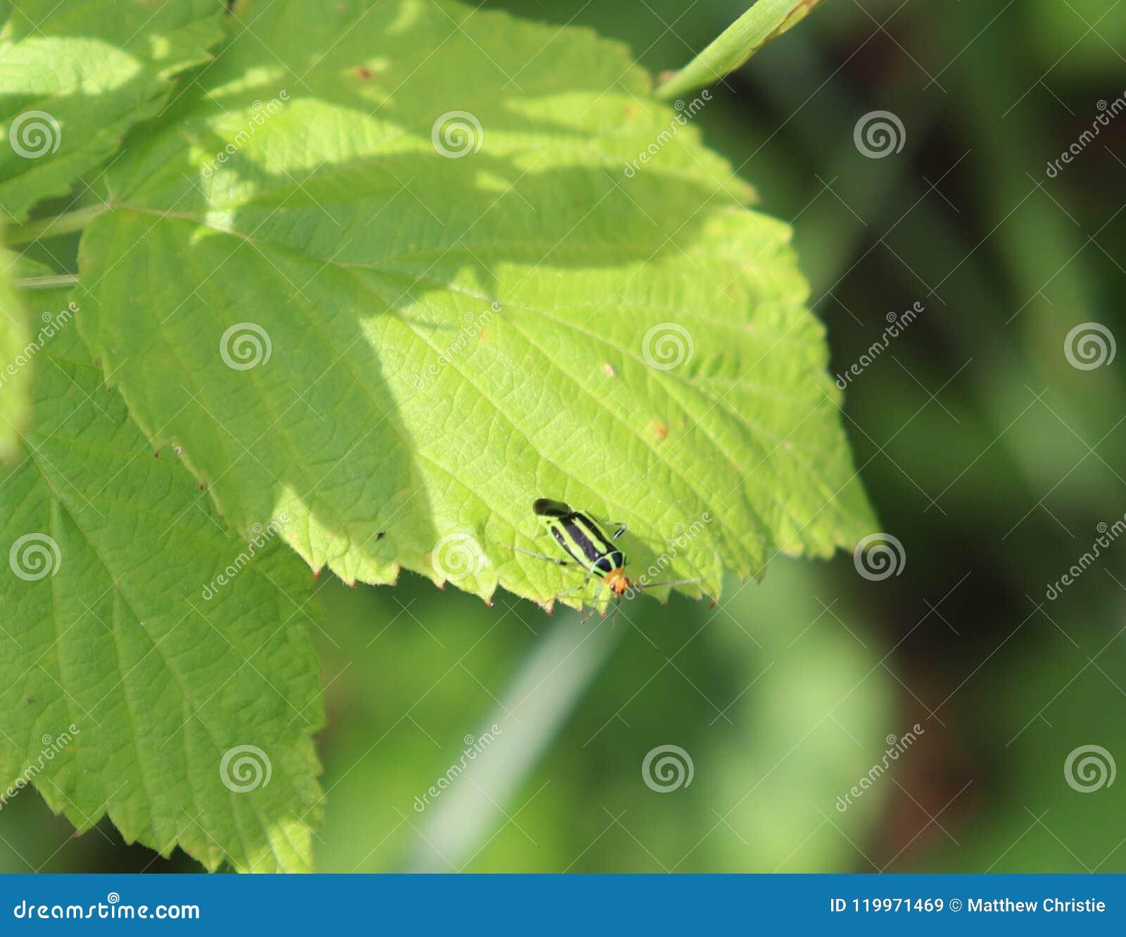 臭虫,多彩多姿,小,绿色,黑,橙色,外面