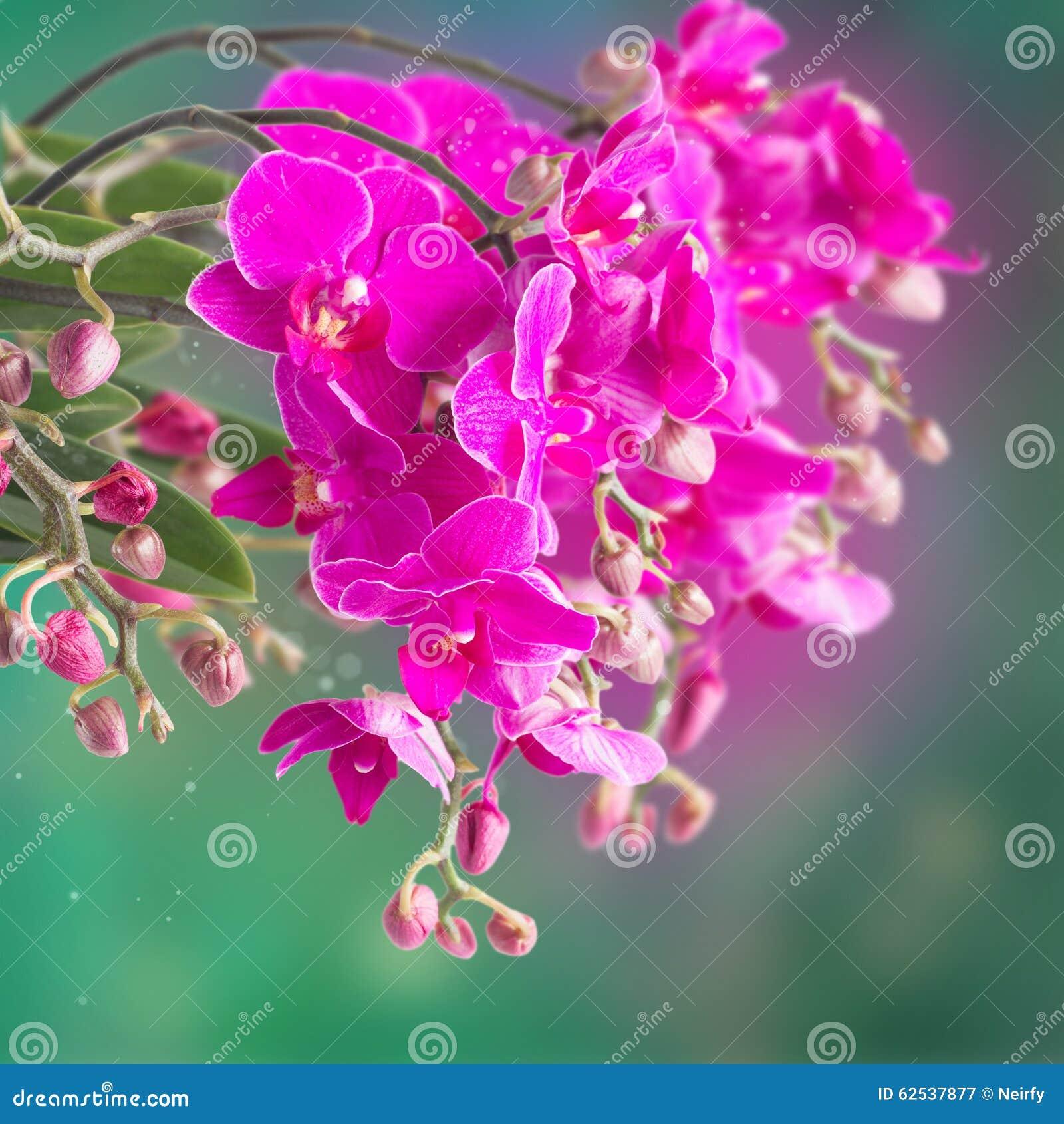 紫色兰花分行
