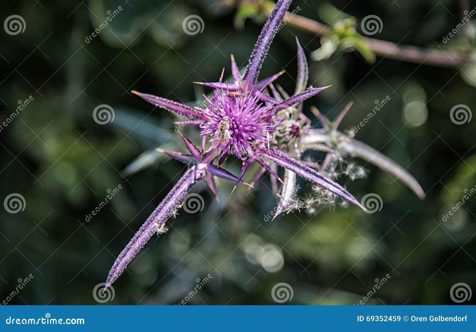 成人刺�9l#�+N��Y�_紫色刺