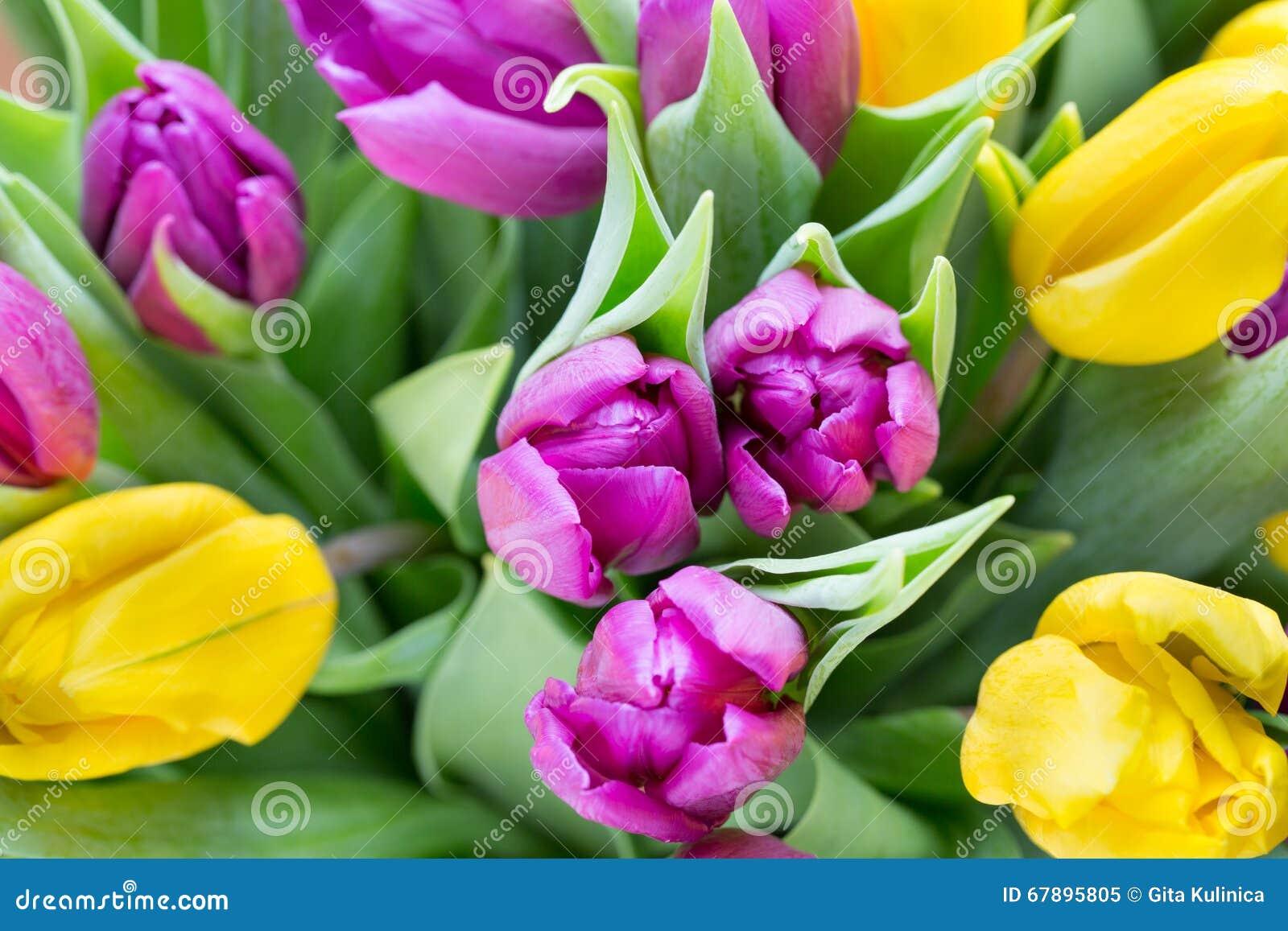 紫色和黄色郁金香花束 在灰色backgrou的更多郁金香
