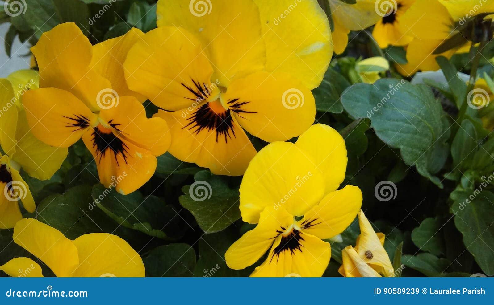 黄色和黑色