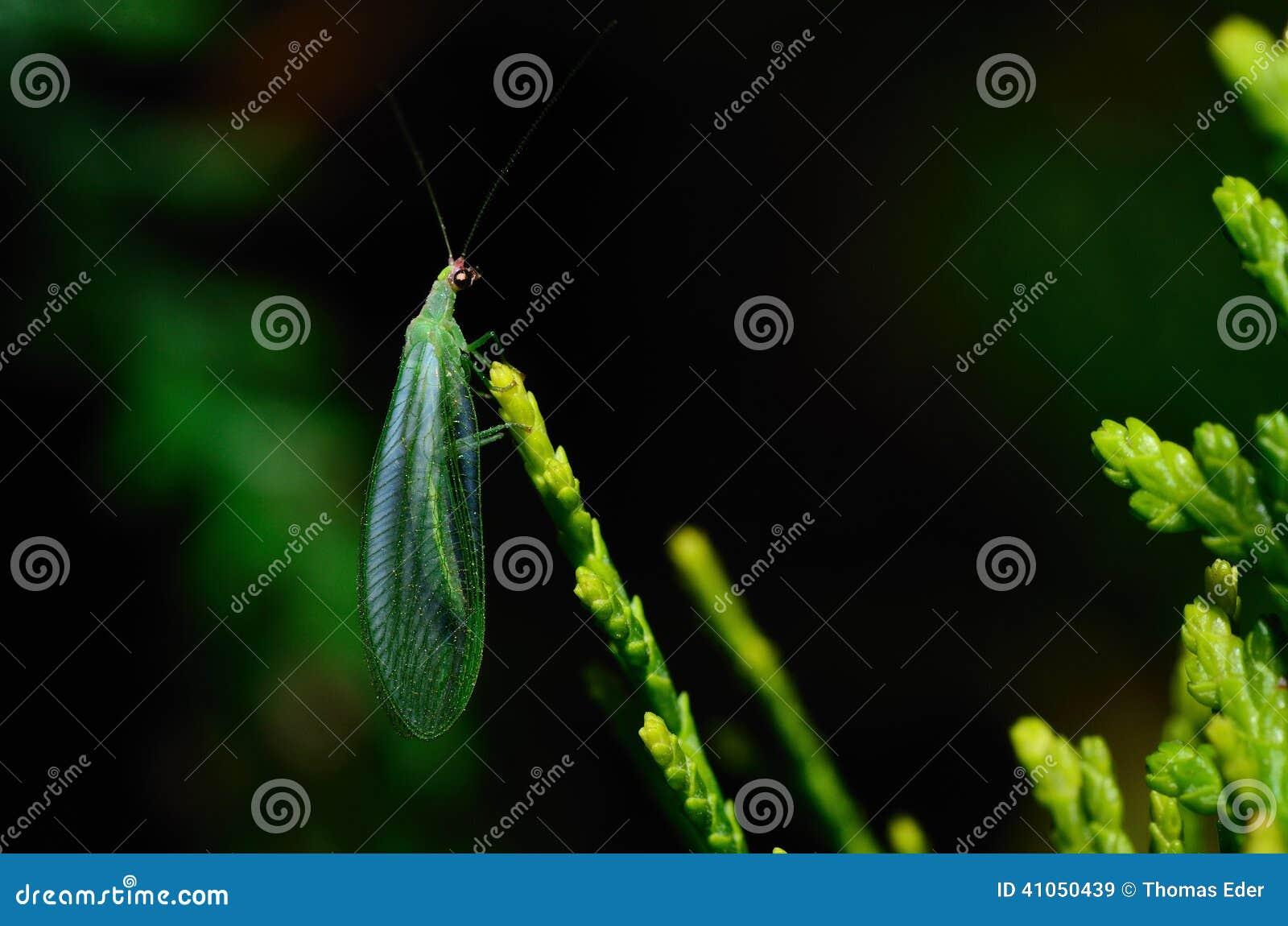 绿色昆虫在春天