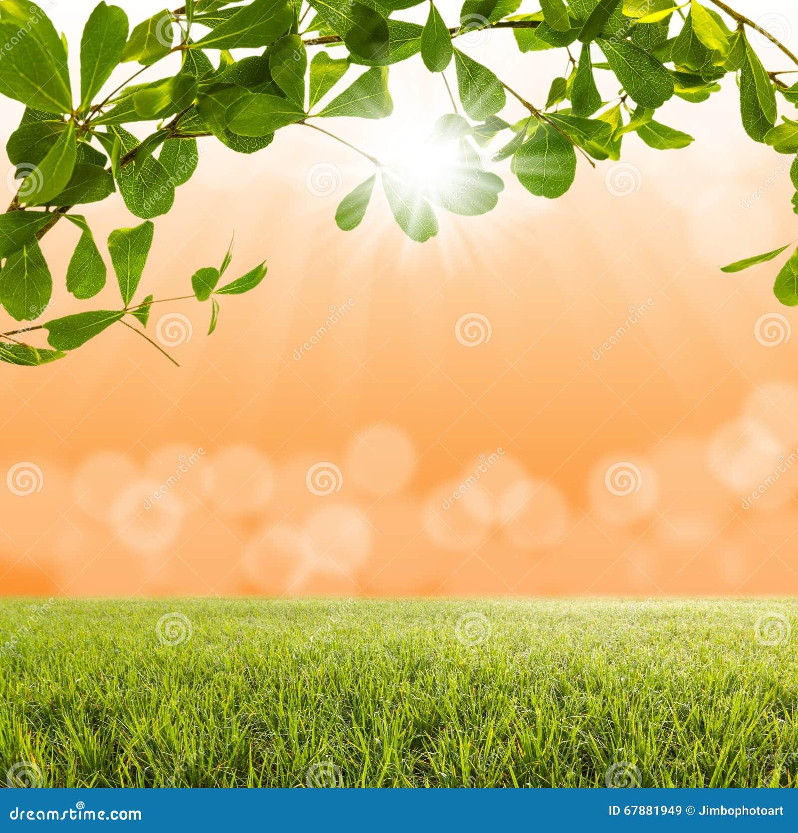 绿色树和绿草与被弄脏的轻的bokeh