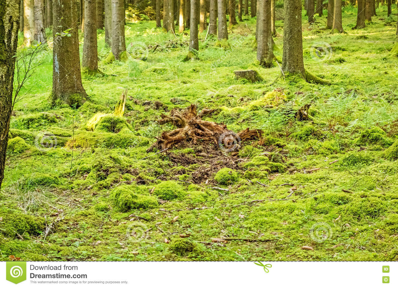 绿色森林地板