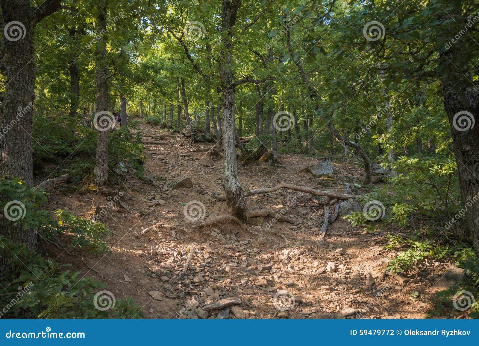 绿色森林夏天背景,山ai陪替氏,克里米亚,乌克兰.图片