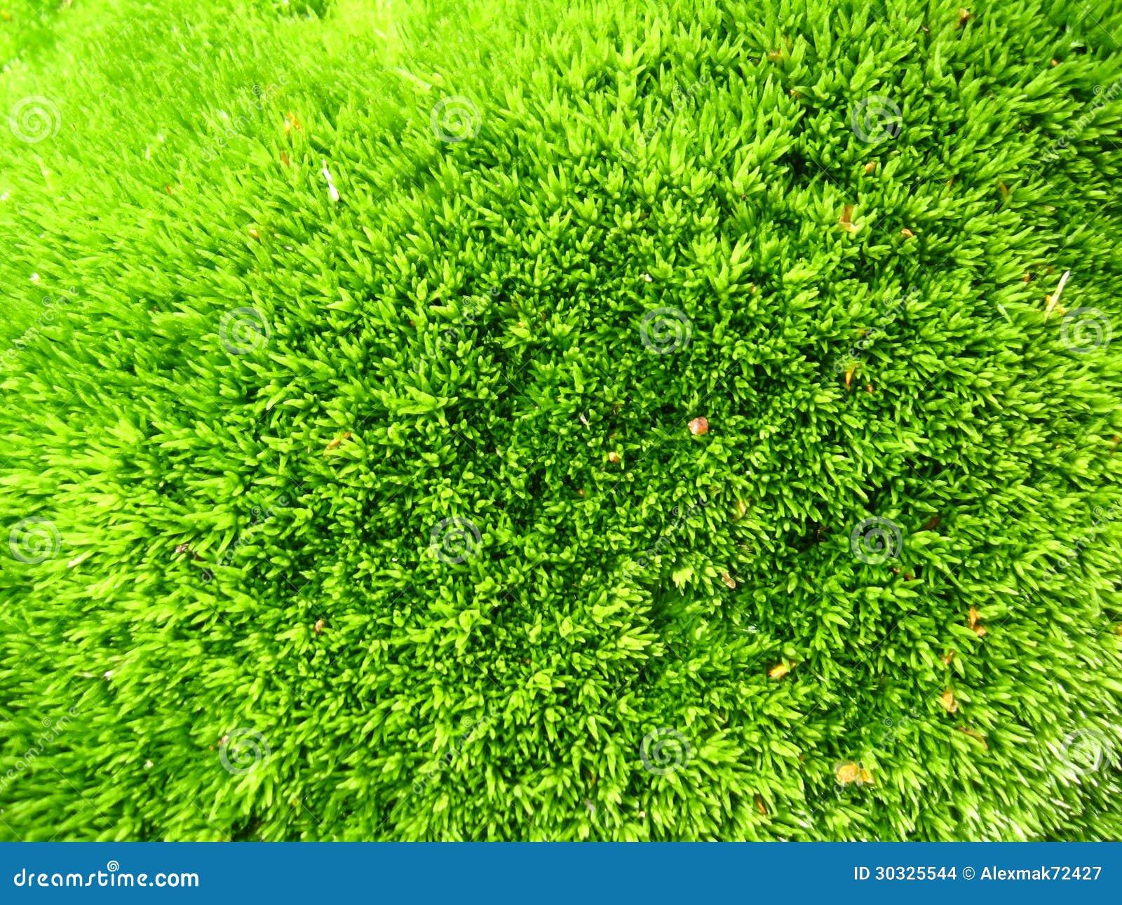 绿色植物生长的背景