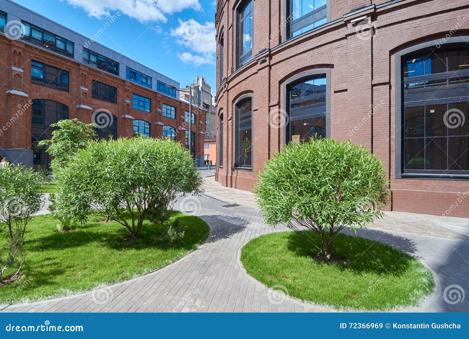 绿色灌木在莫斯科