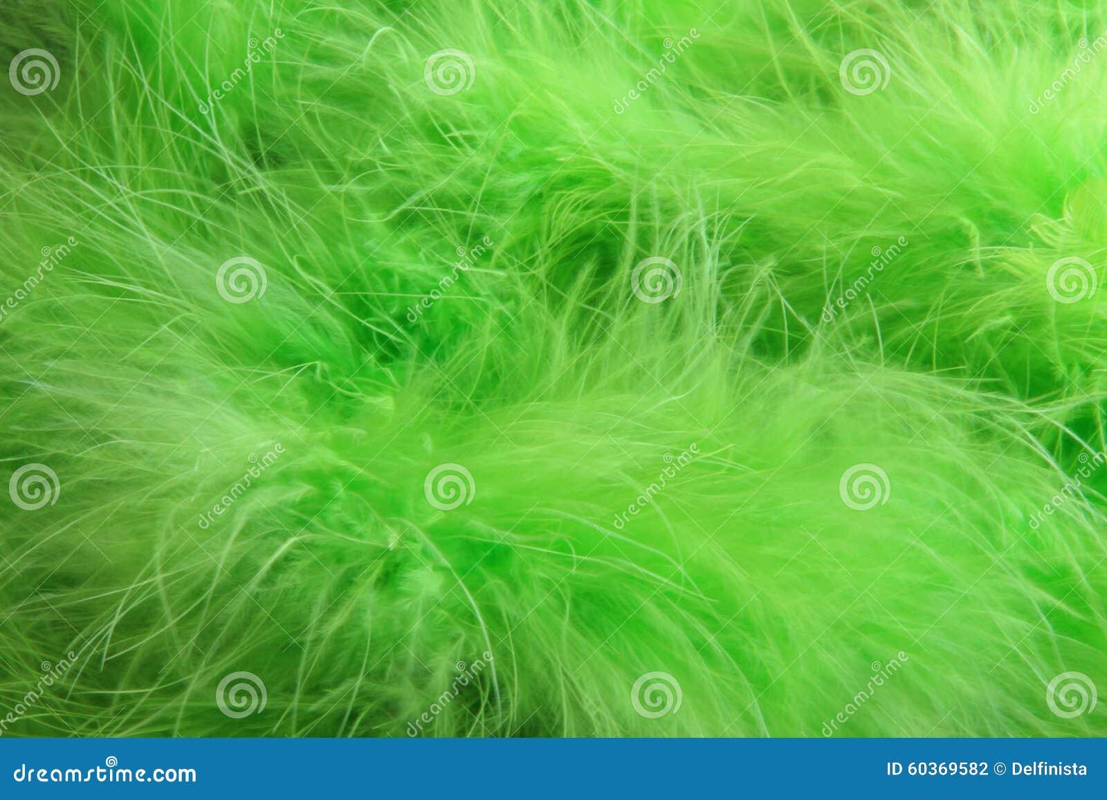绿色用羽毛装饰背景-储蓄照片