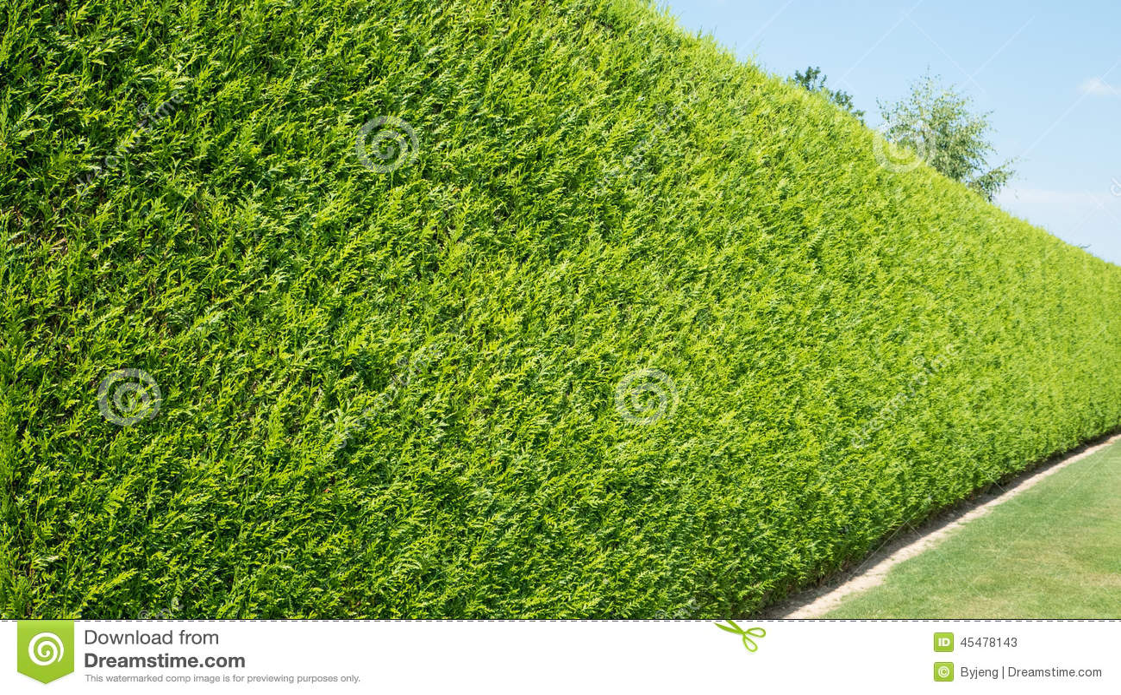 绿色留下墙壁