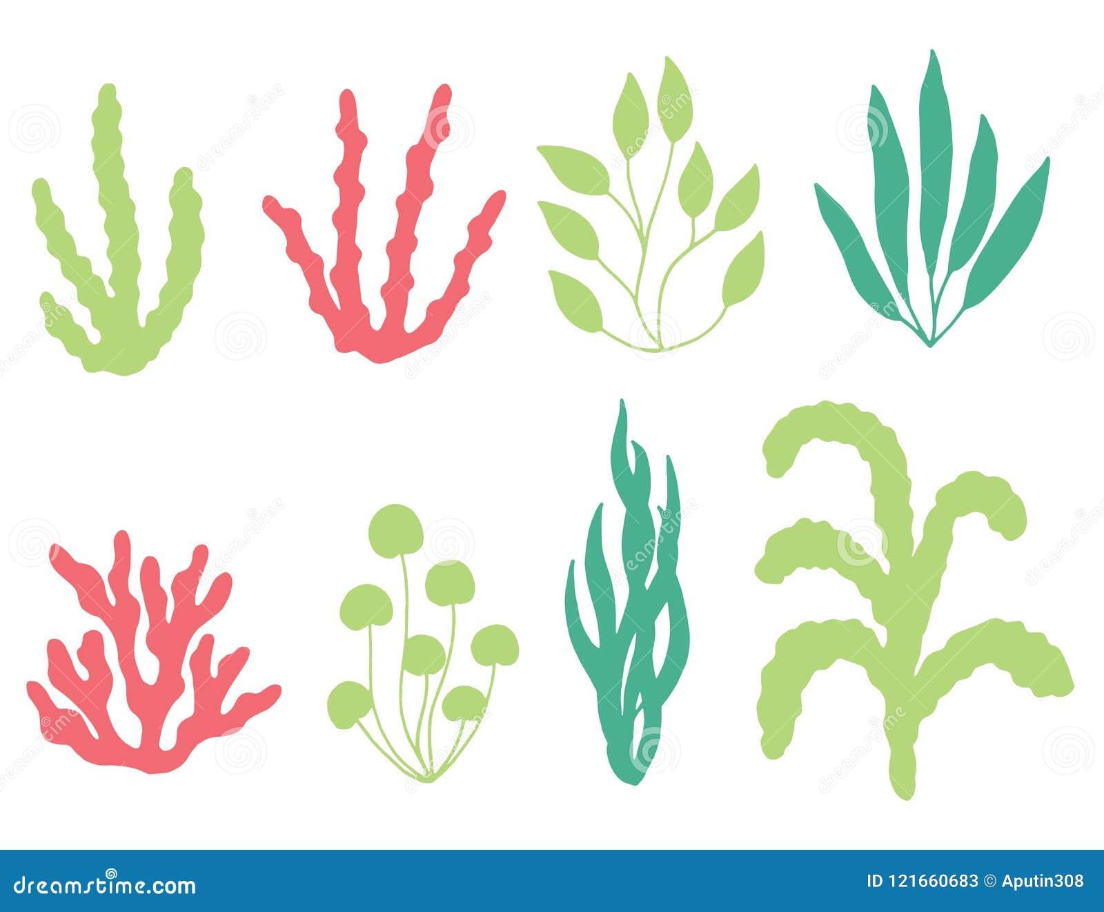 色的珊瑚和海草传染媒介剪影 查出在白色