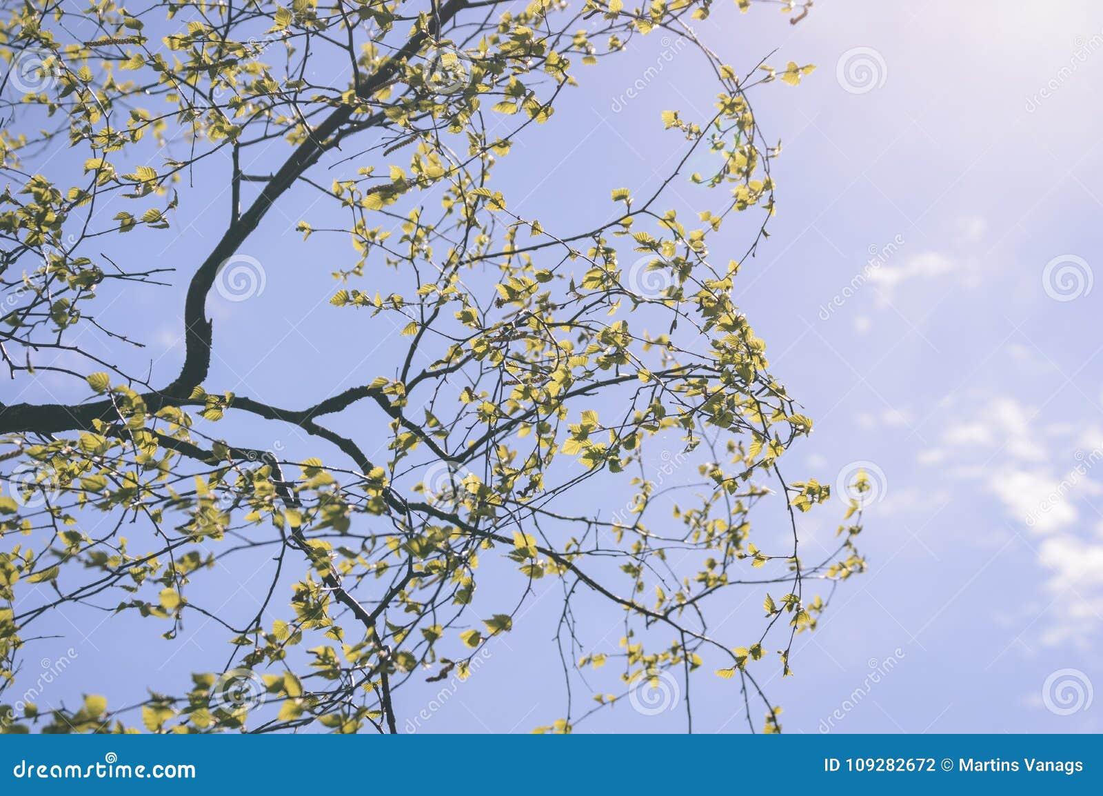色的秋天金子在明亮的阳光-葡萄酒老神色离开