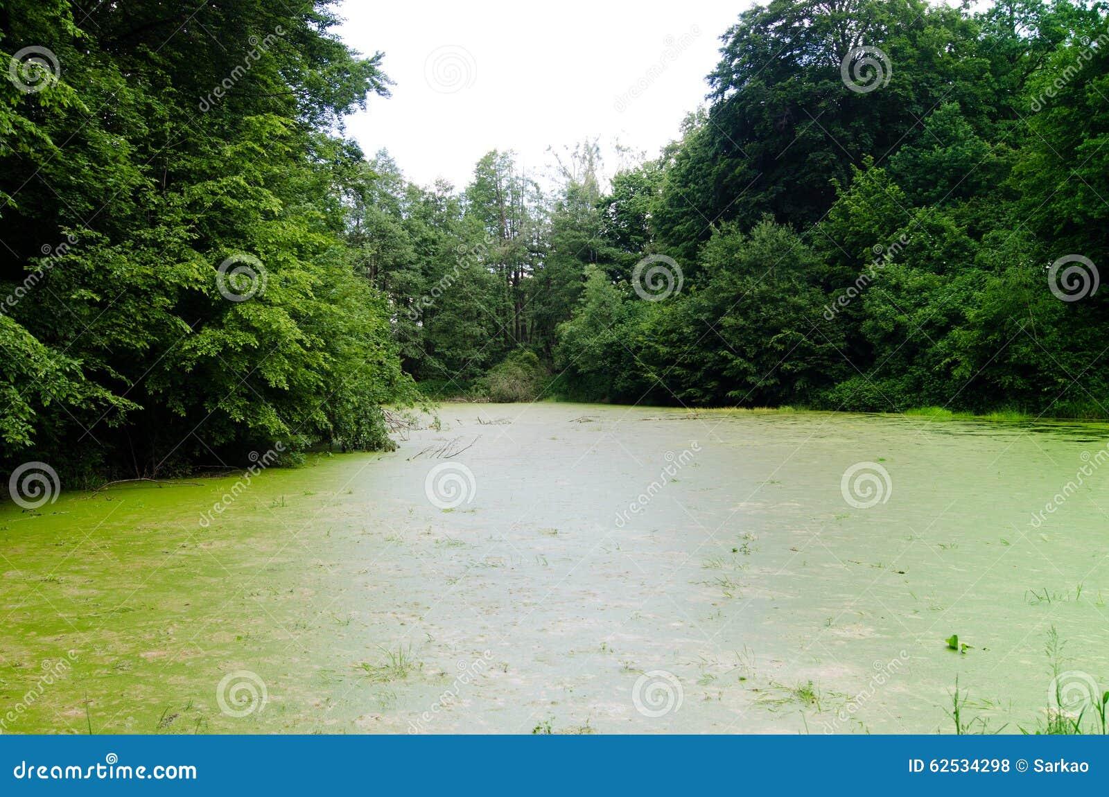 绿色肮脏的池塘