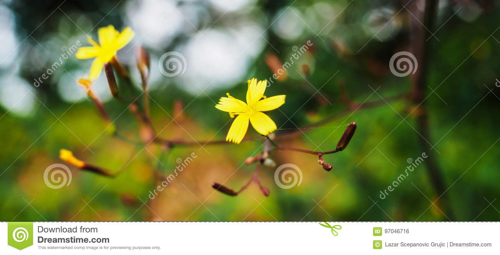 黄色花宏指令