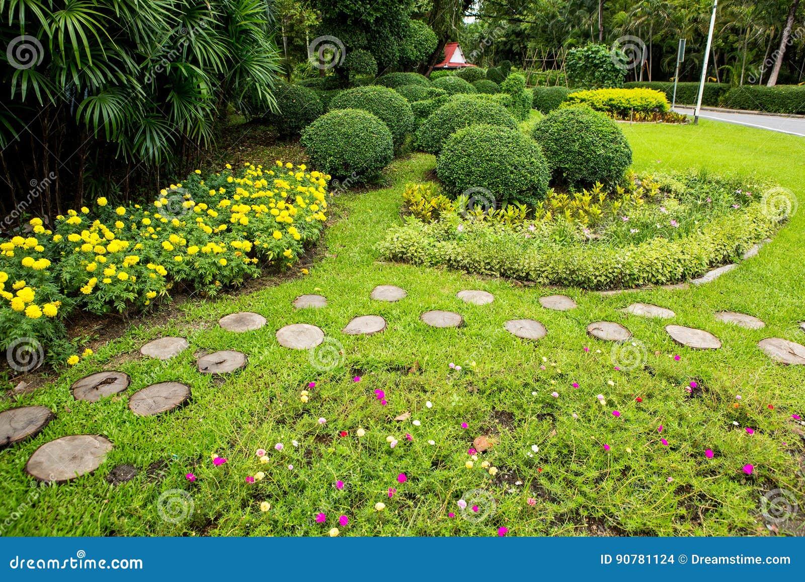 绿色草坪和树公园
