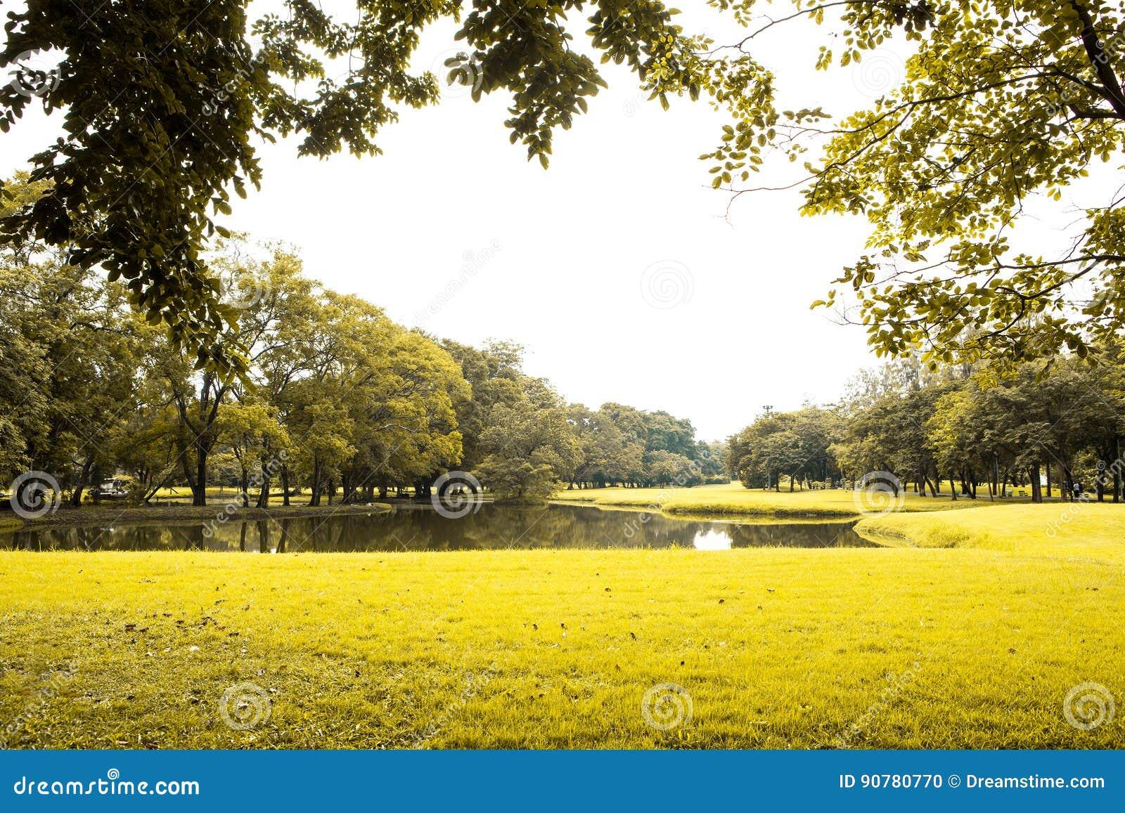 绿色草坪和结构树