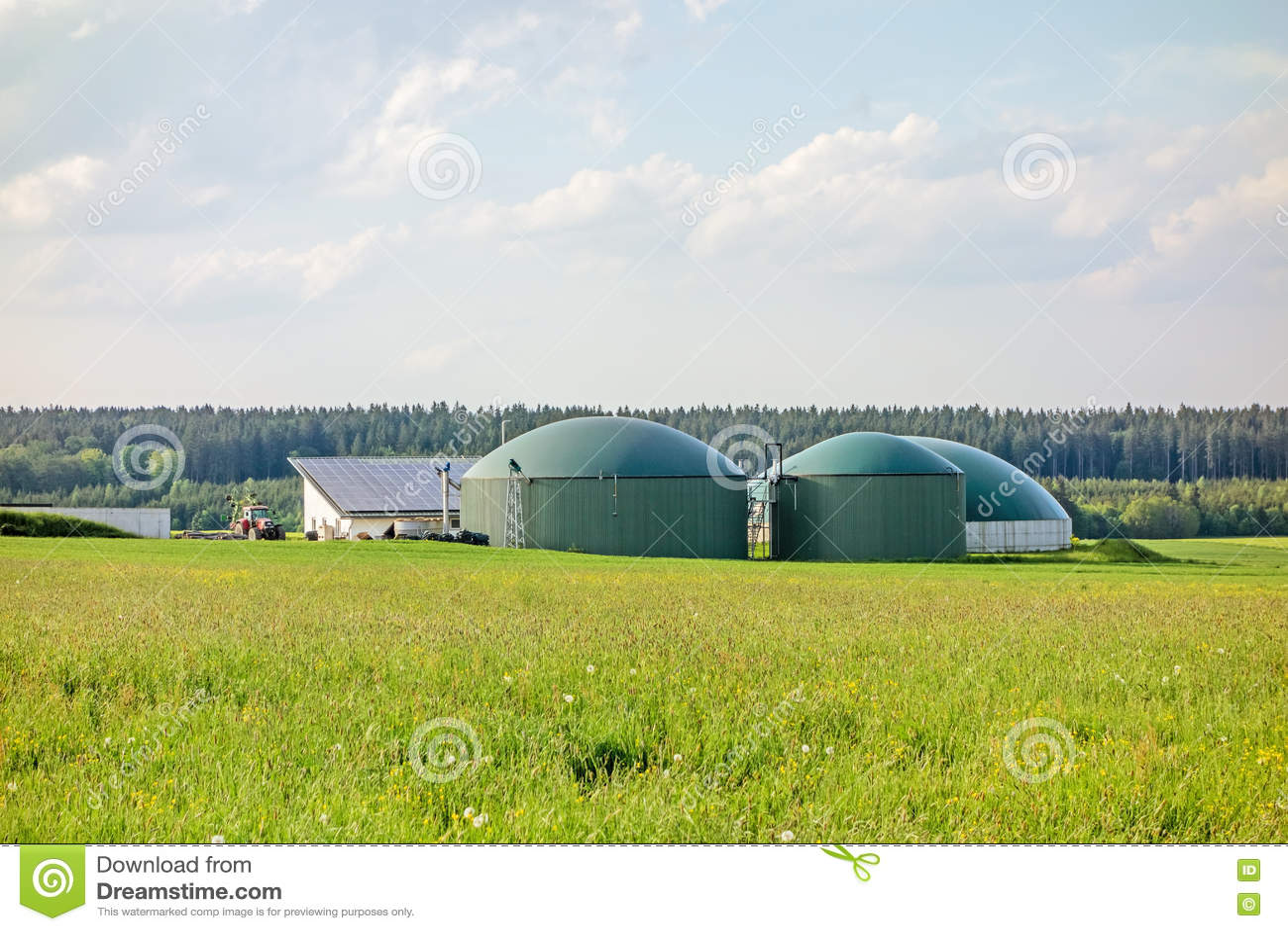 绿色草甸的生物气植物