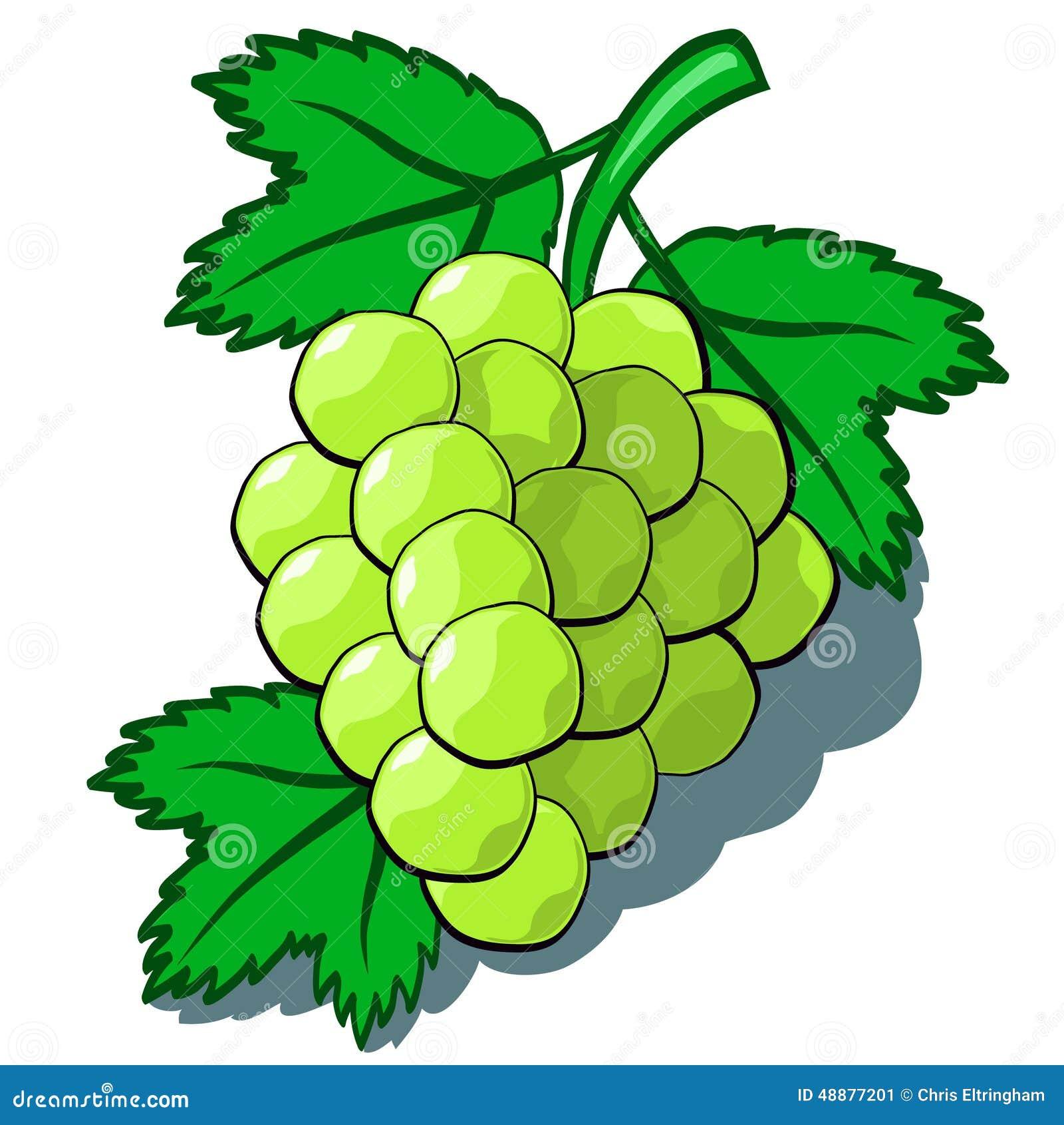 向量例证: 绿色葡萄