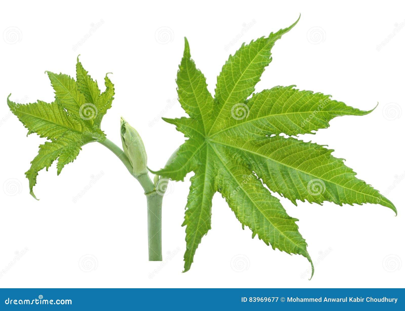 绿色铸工叶子