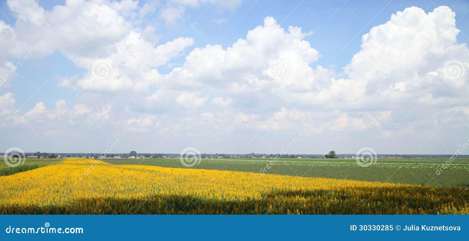 黄色领域在波兰