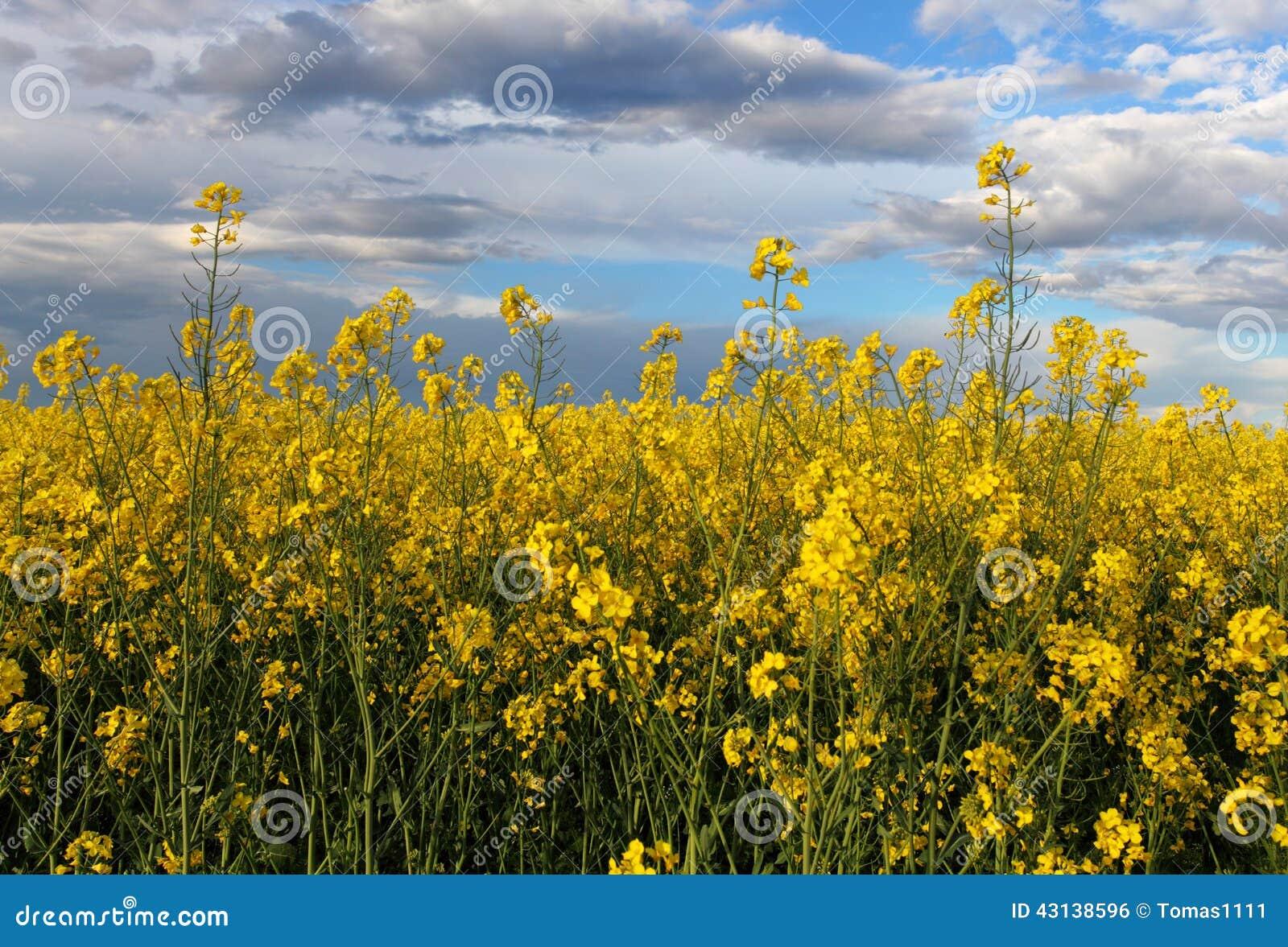 黄色领域-强奸