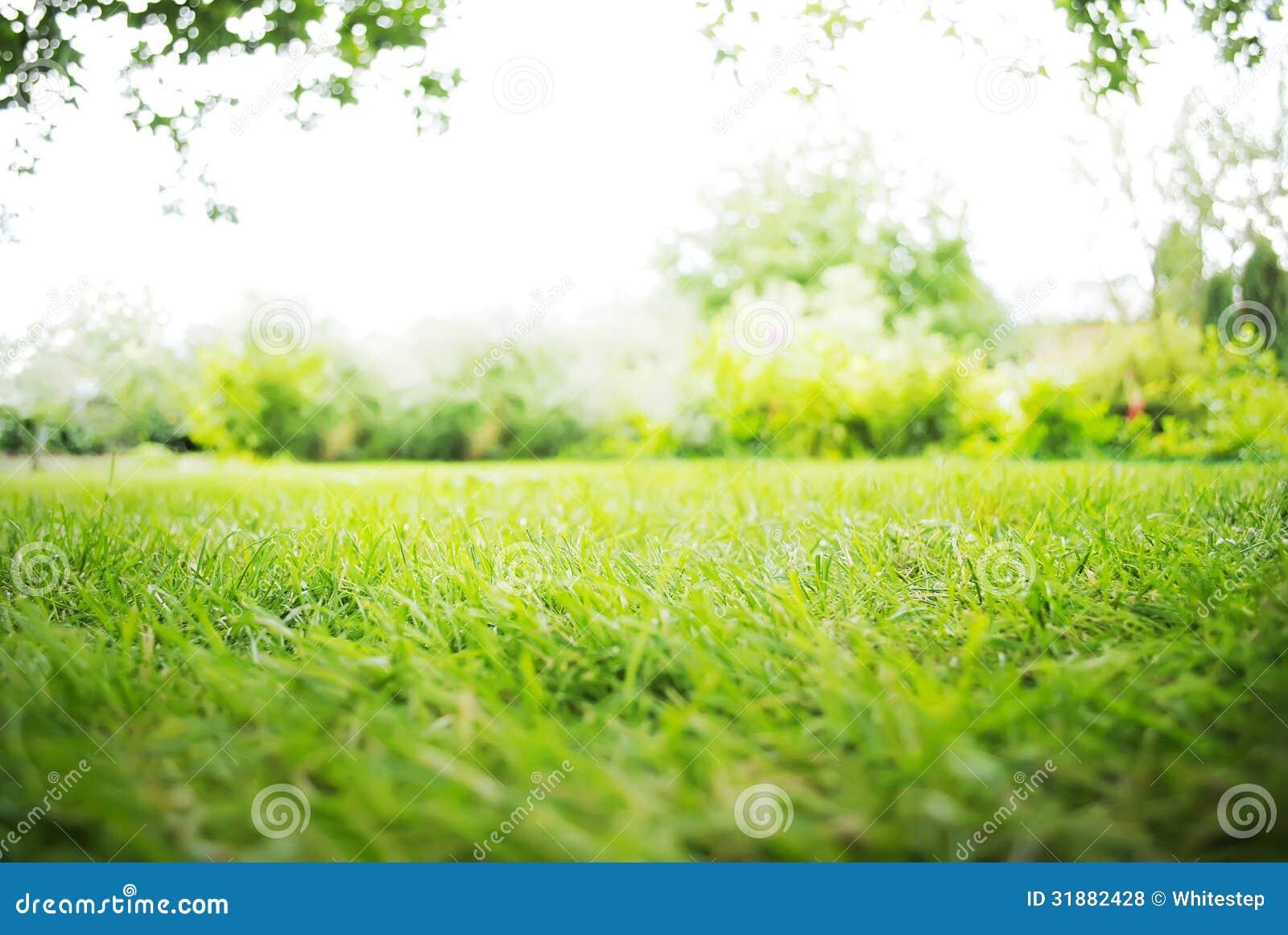 绿色风景背景