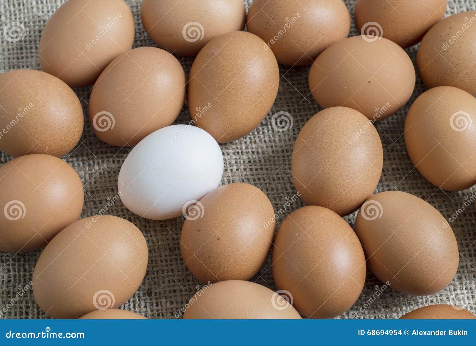 黄色录像鸡大巴_黄色鸡鸡蛋和白色在中部.