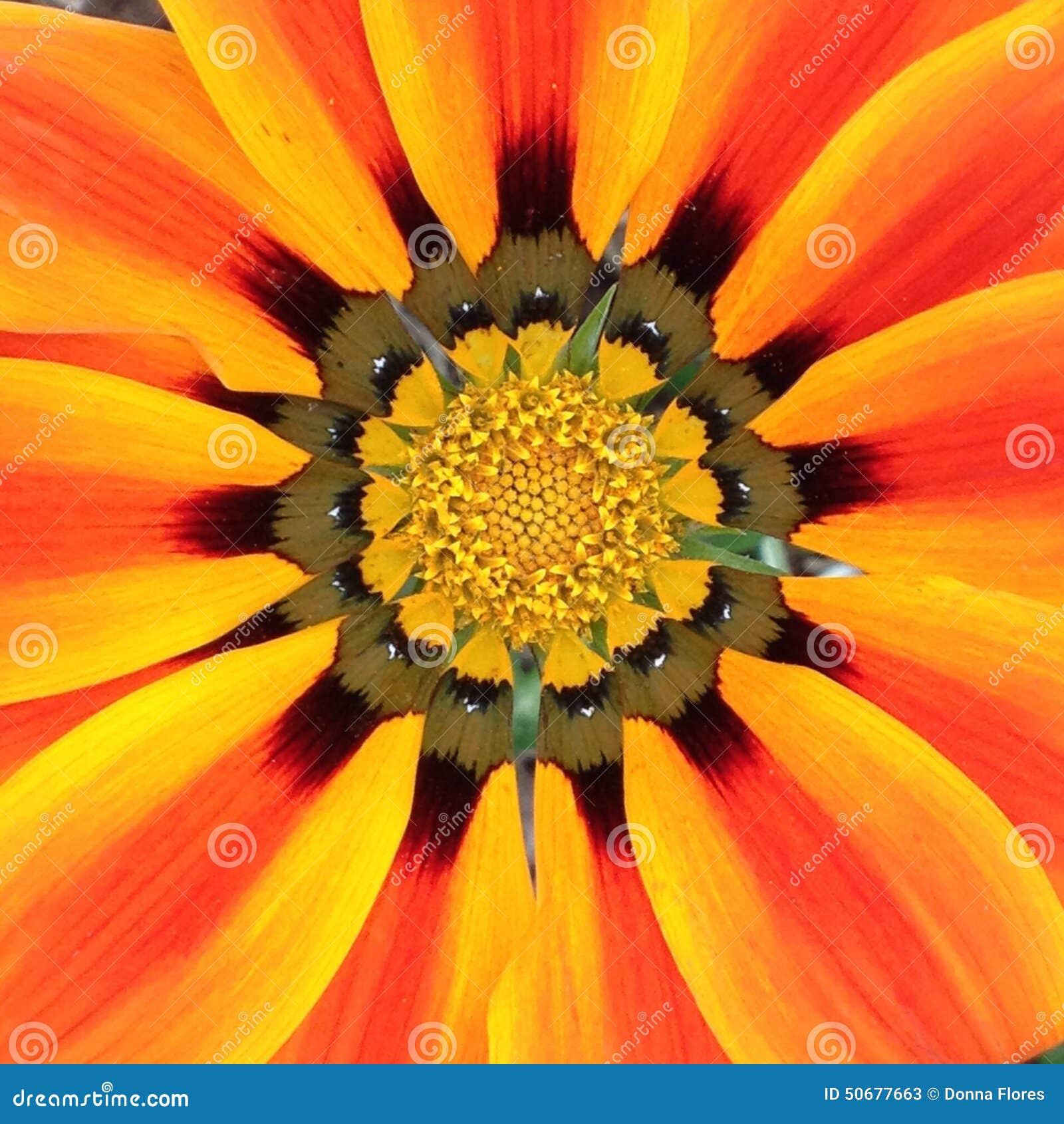 Download 黄色,红橙色花 库存图片. 图片 包括有 黄色, 放热, 橙色, 唯一, 特写镜头, browne, 本质 - 50677663