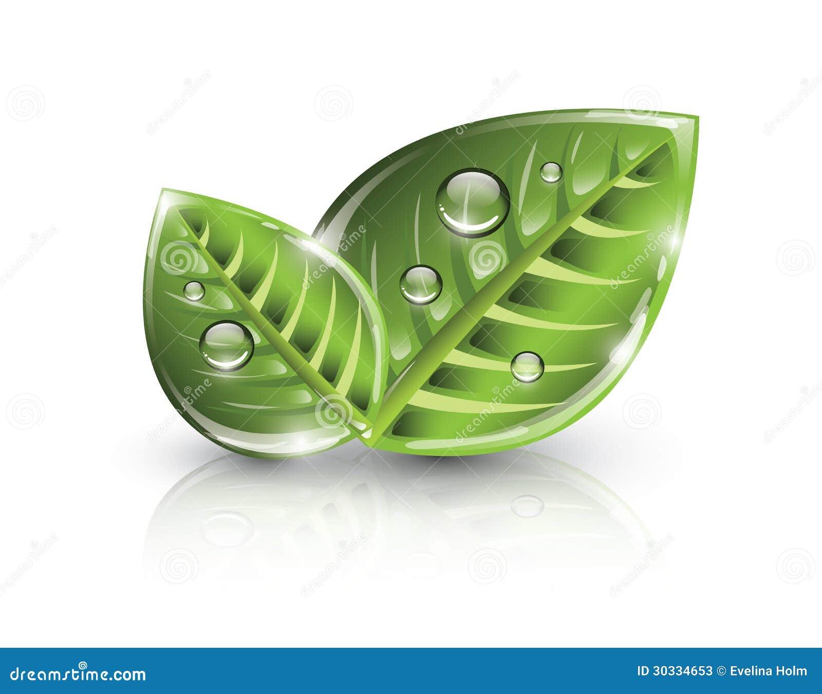 绿色eco叶子