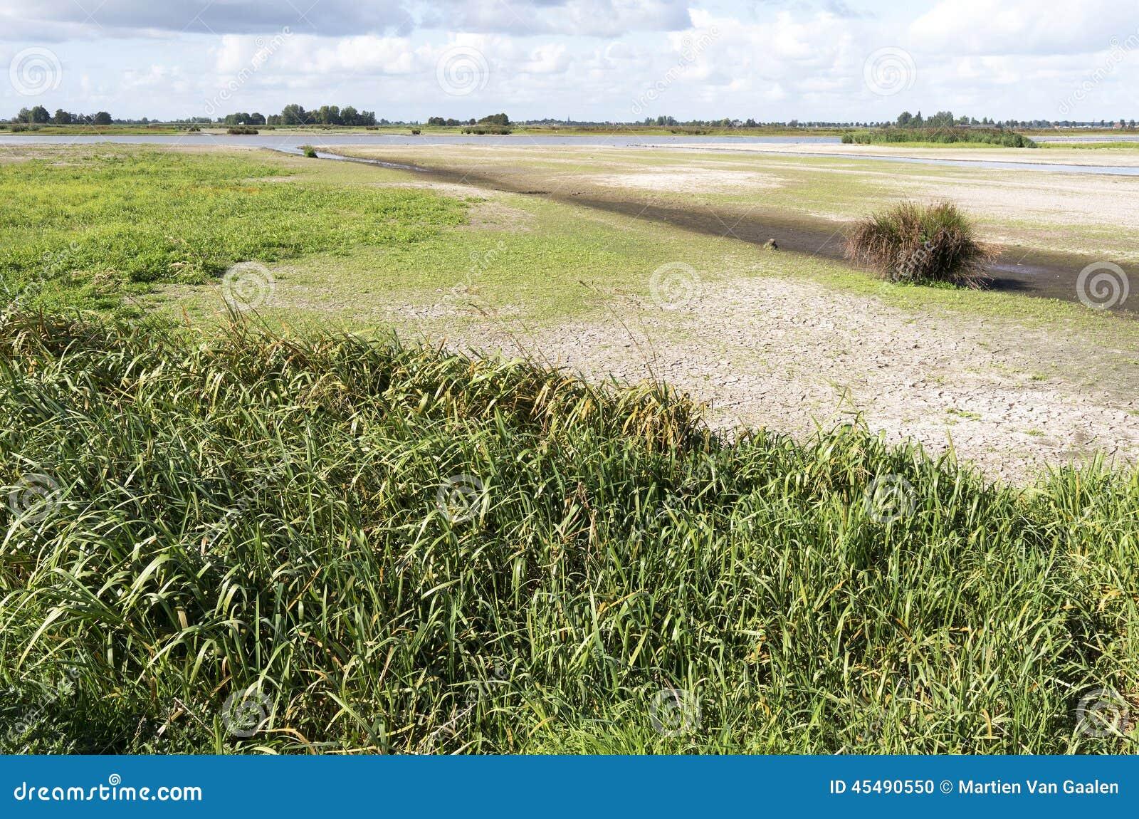 绿色Jonker沼泽风景