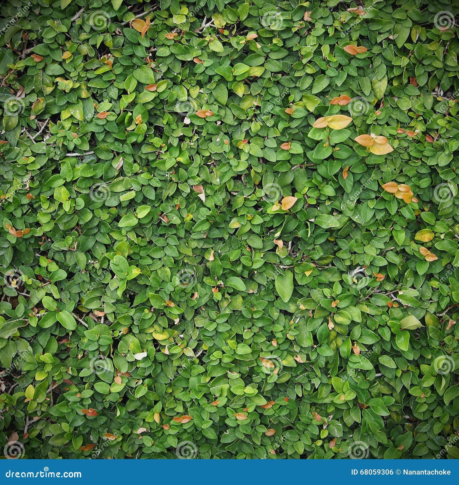 绿色leafe墙壁背景